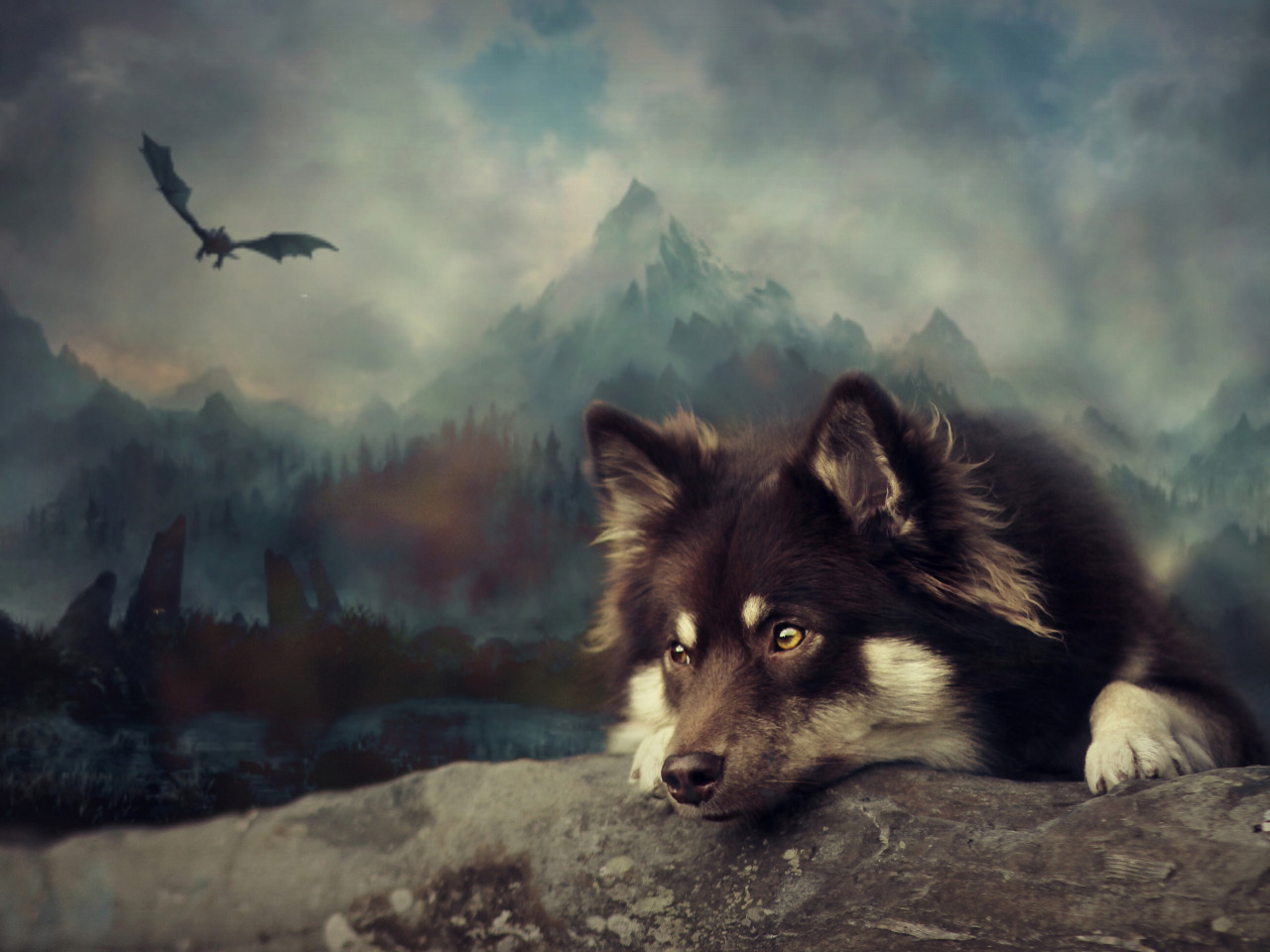 фото собаки породы финский лаппхунд