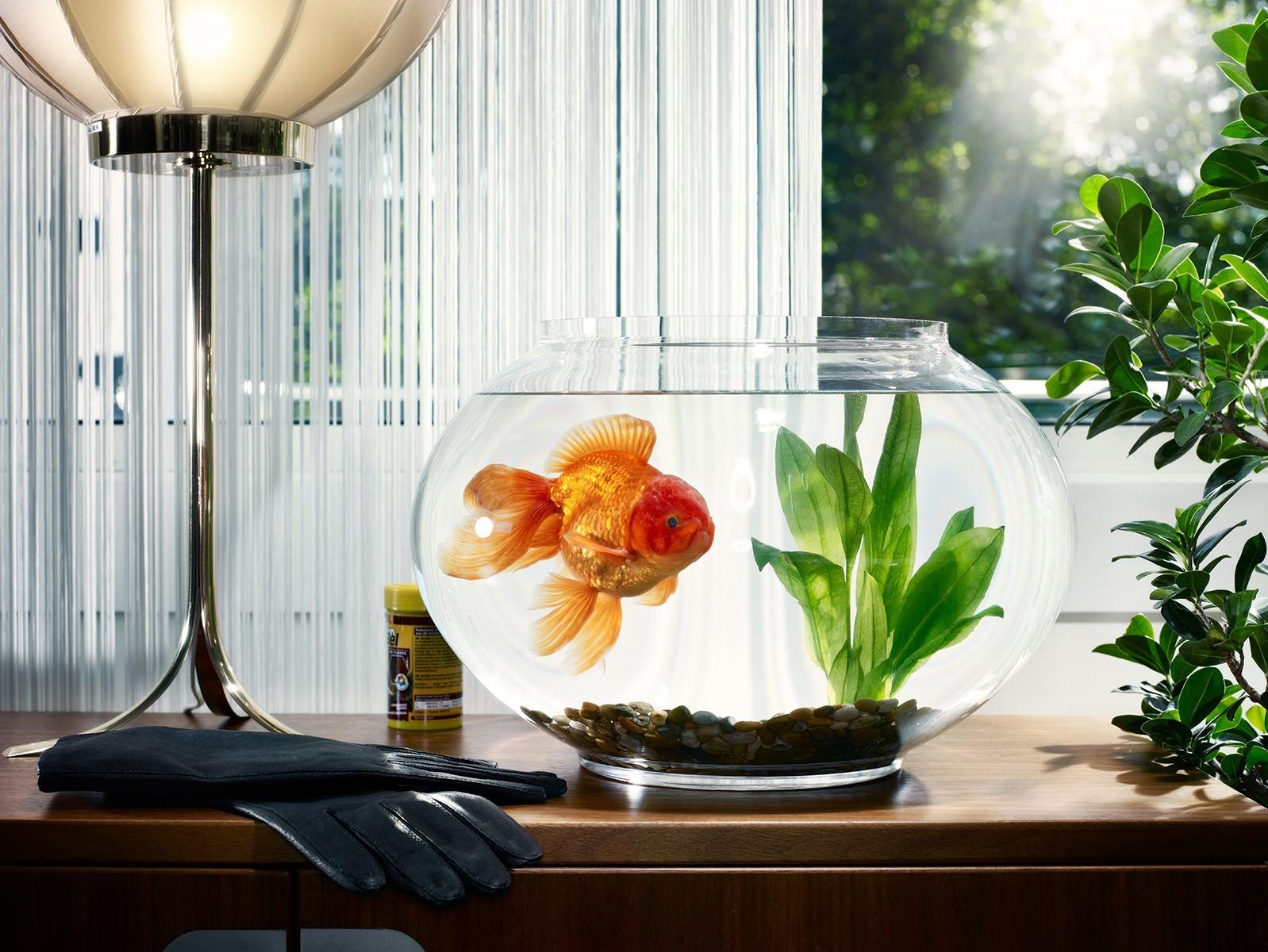 мало сколько рыбок в аквариуме для здоровья по фэншую мам термобелье