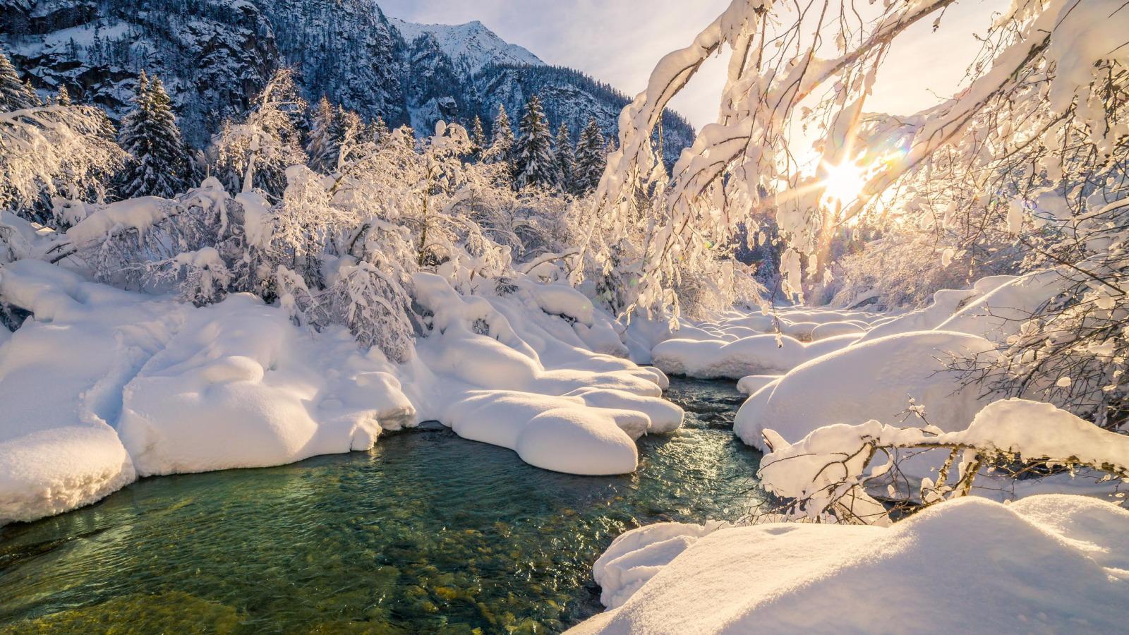 неприятных запахов фото красивых зимних уголков представитель по-разному приживается