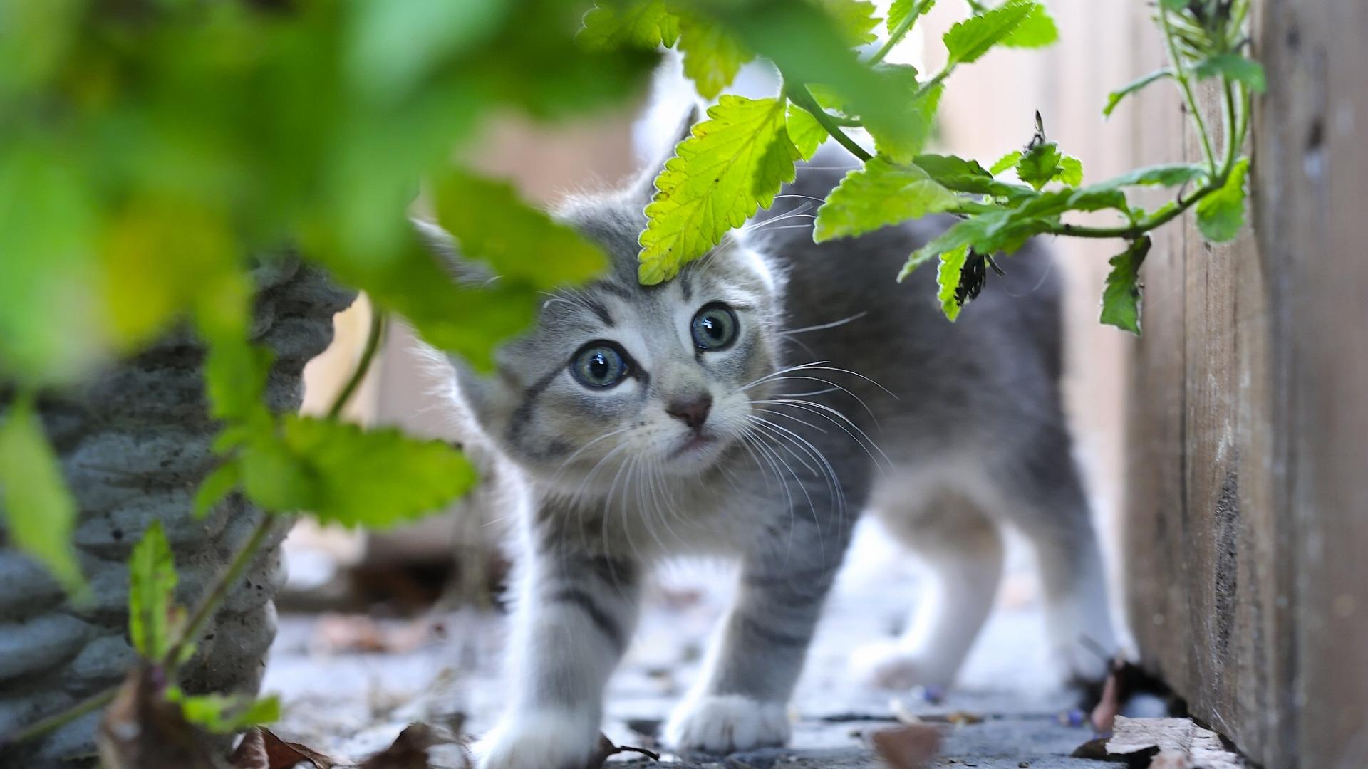 природа животные кот котенок серый журавлики nature animals cat kitten grey cranes  № 654732 бесплатно