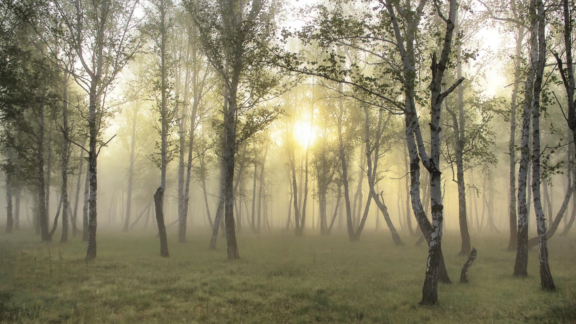 природа березы трава деревья закат nature birch grass trees sunset  № 1278469 без смс