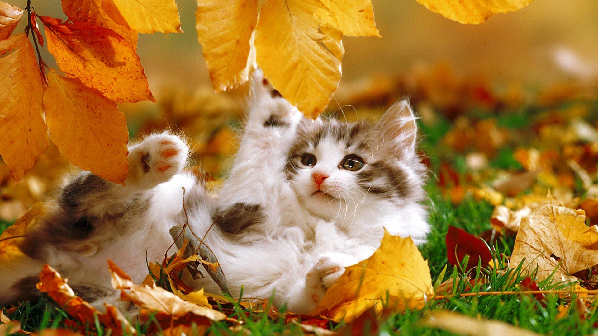 кошка осень листва  № 3898479 бесплатно