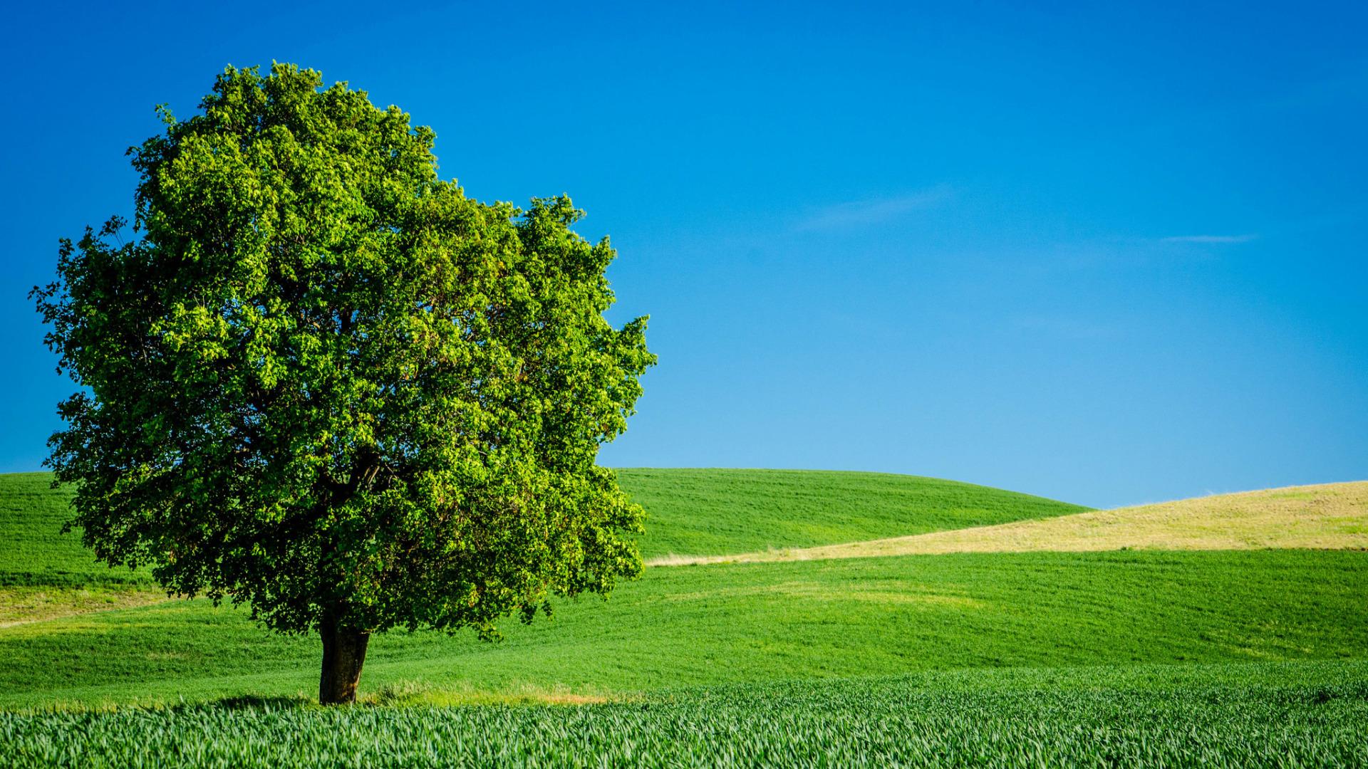 дерево поле  № 439108 без смс