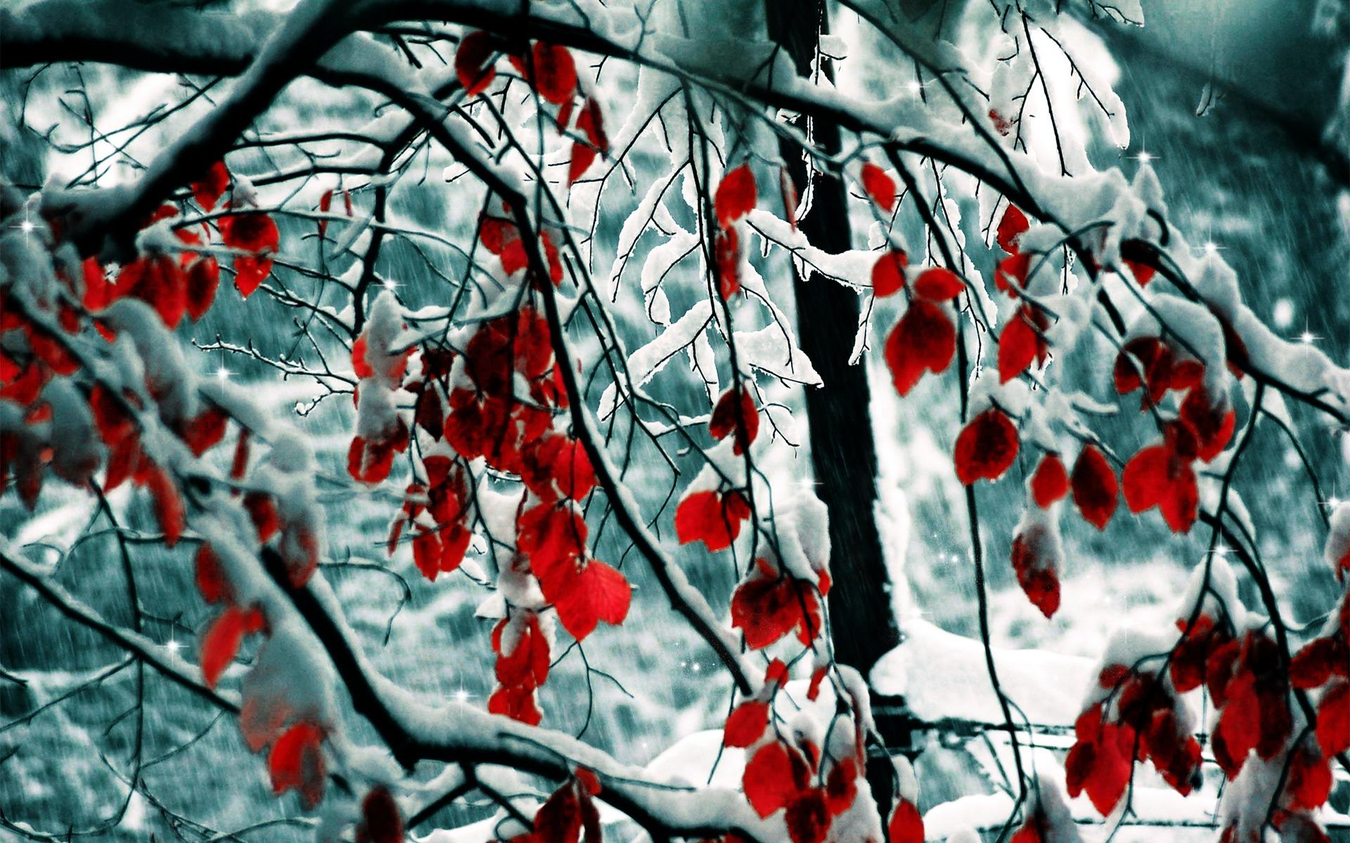 природа ветка снег  № 3089915 без смс