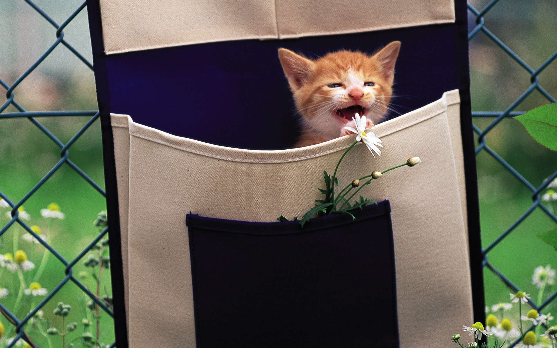 Two kittens in wooden box Photo 19201600  4  Wallcoonet