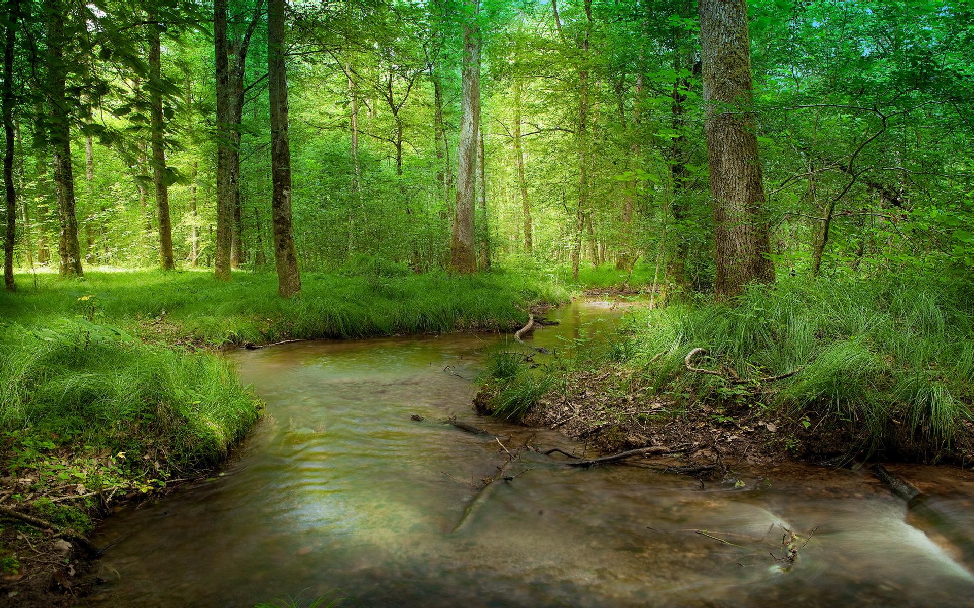 река лес  № 2789144 бесплатно