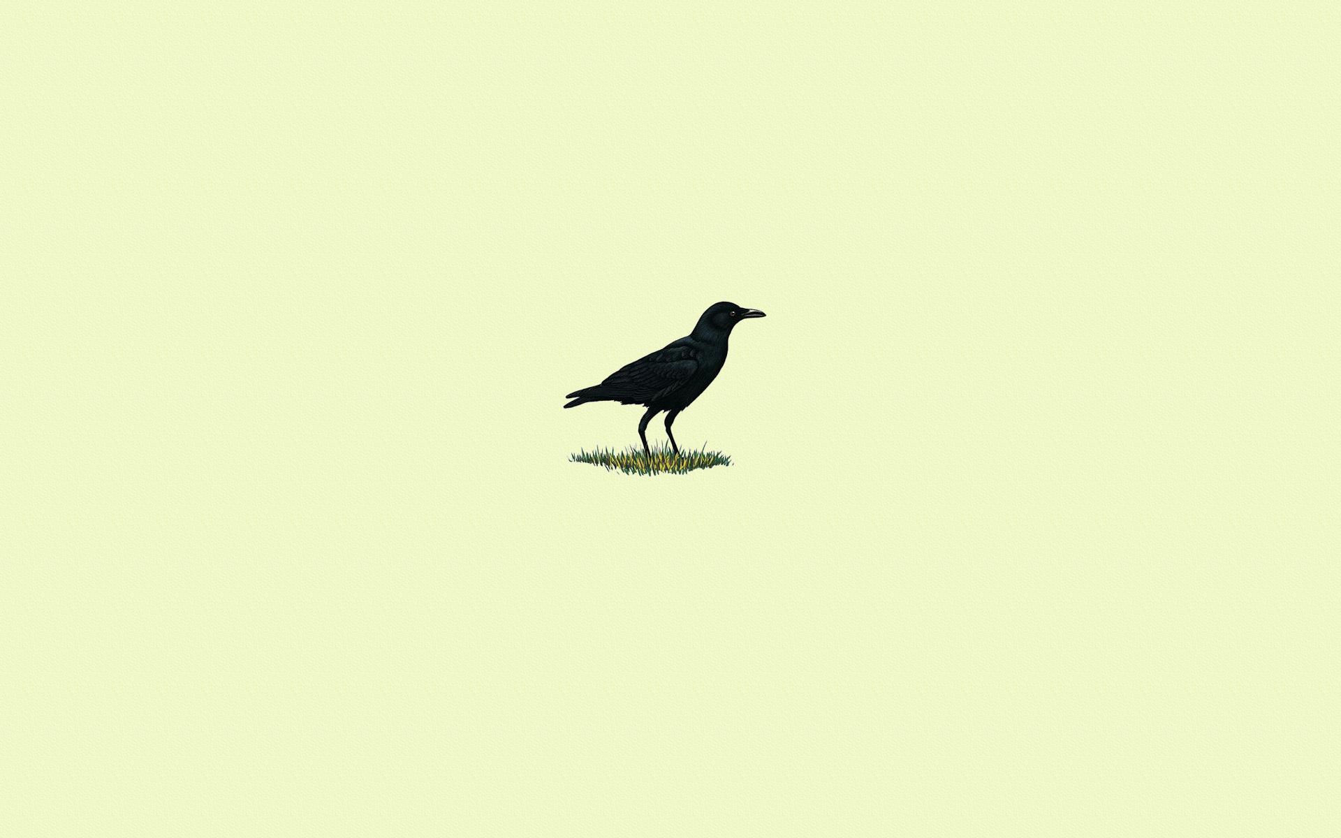 Amazing Wallpaper Bird Minimalist - voron-trava-ptica-chernyy  Graphic_737044.jpg