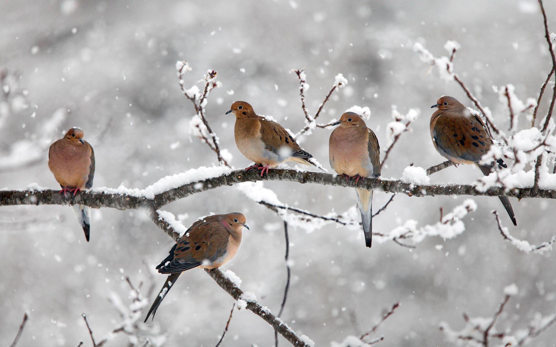 птички на снегу  № 101514  скачать