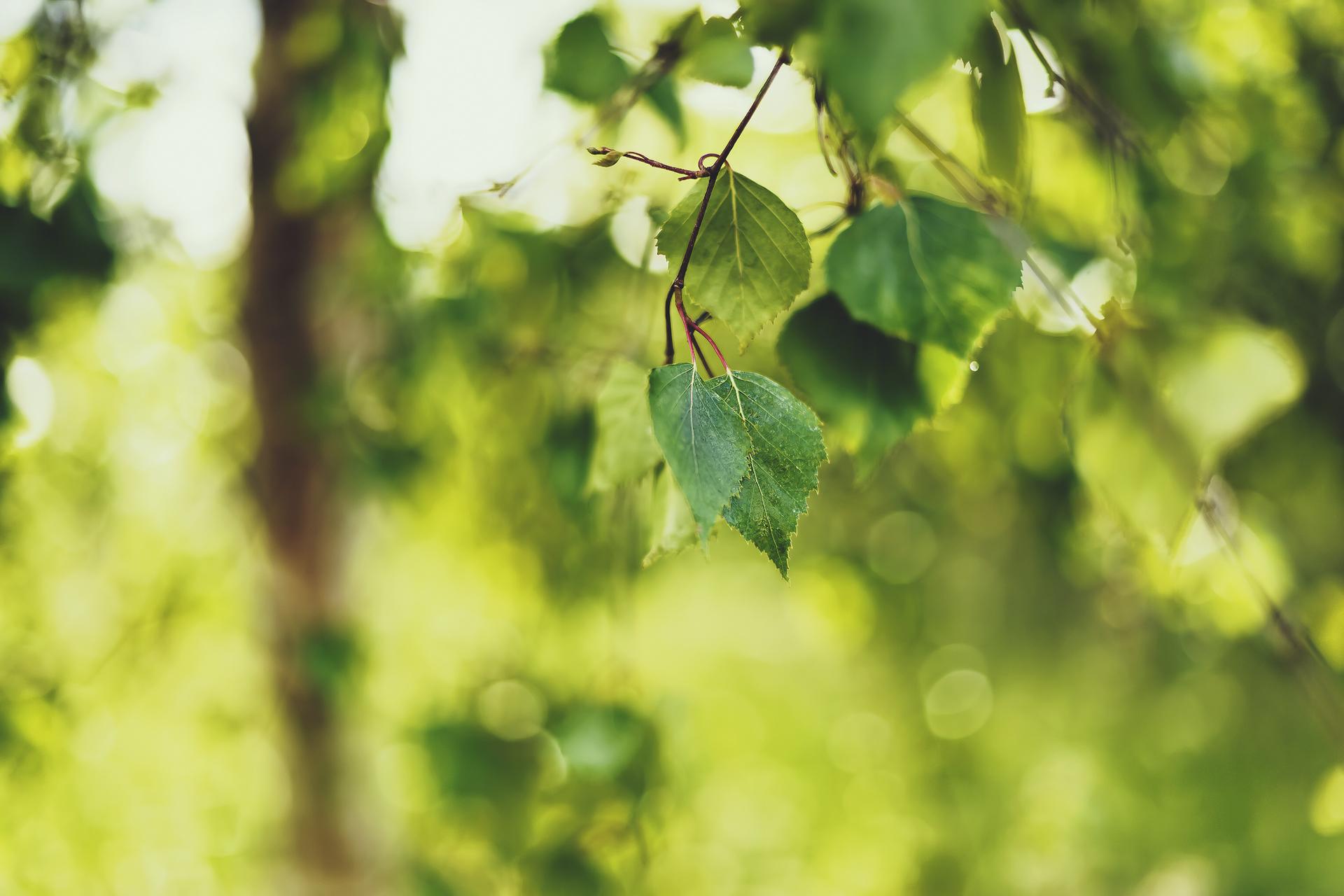 листья зелень фокус  № 1341583 бесплатно