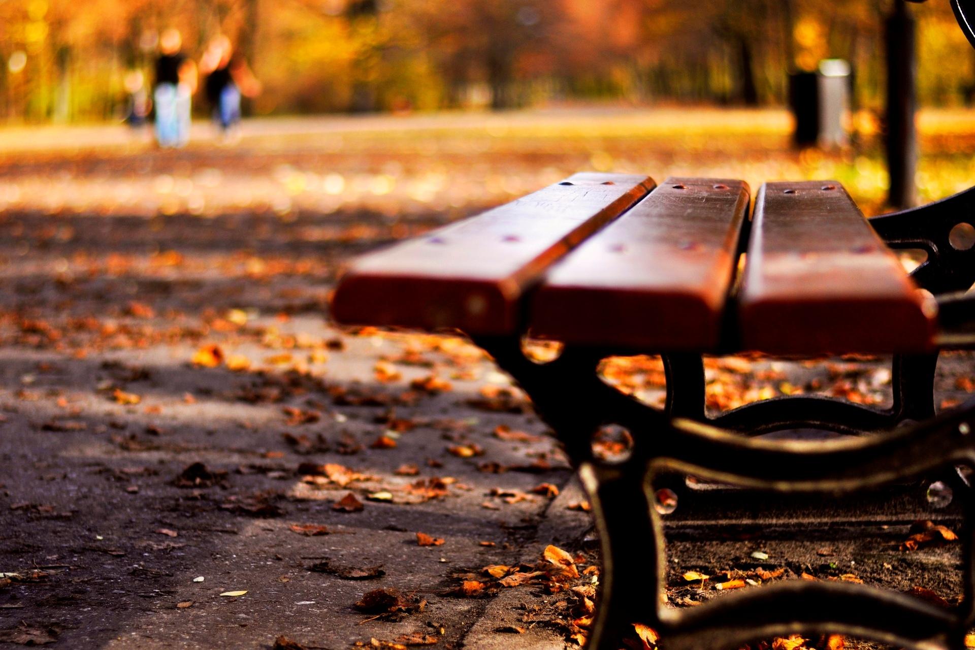 Осень листья лавка стол  № 3187400 без смс
