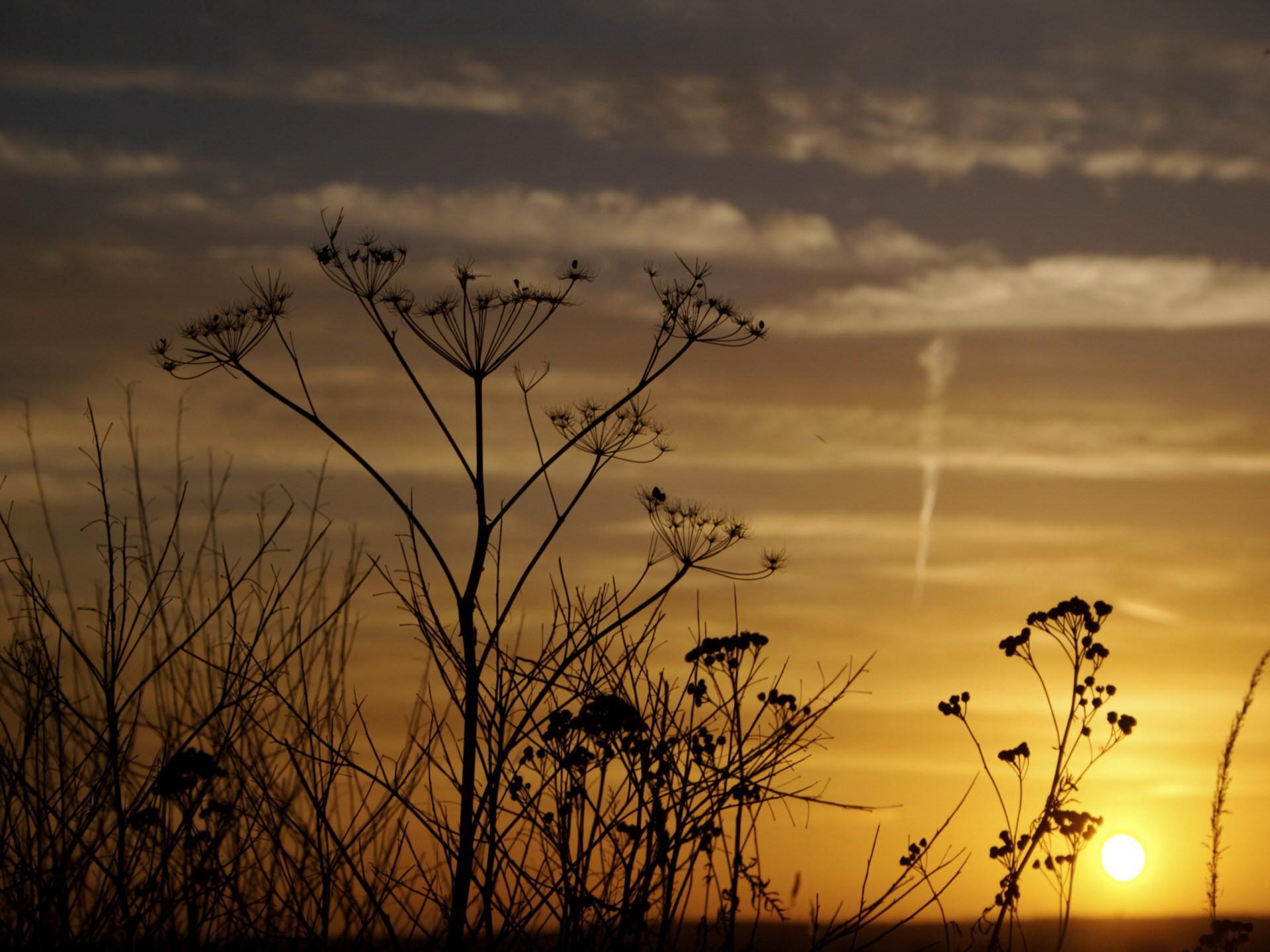 закат небо полевые растения  № 963485 загрузить
