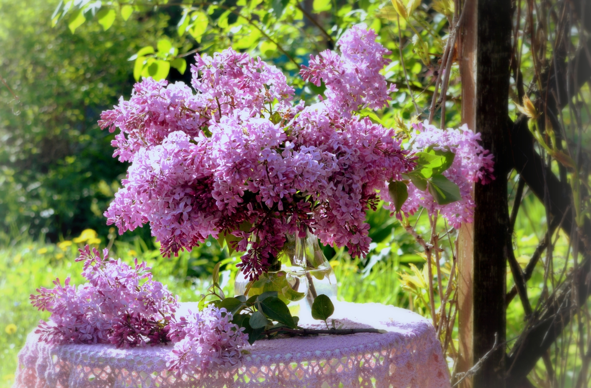 природа цветы ваза сирень  № 3063887  скачать