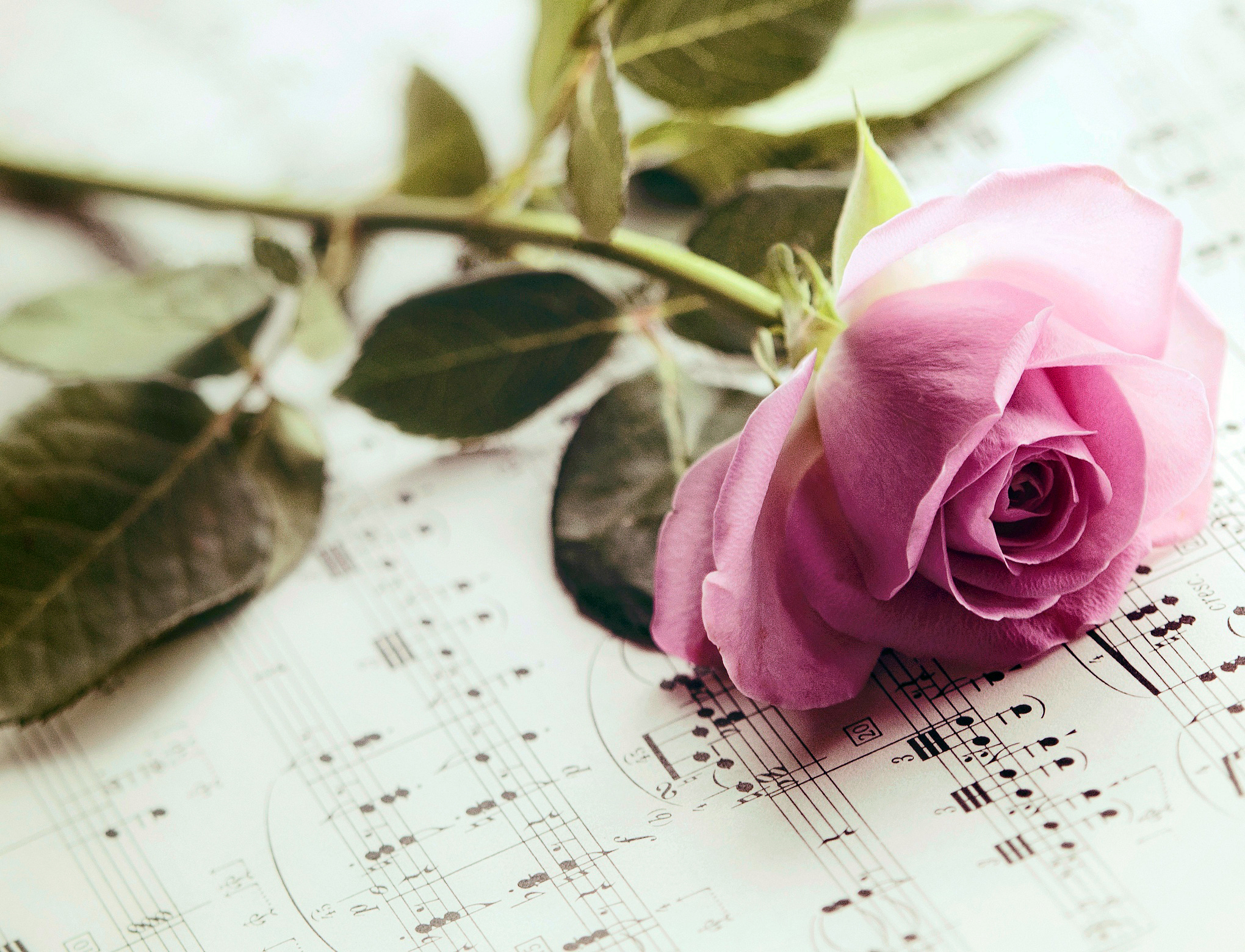 цветы тетрадь листы сердце  № 1351055 без смс