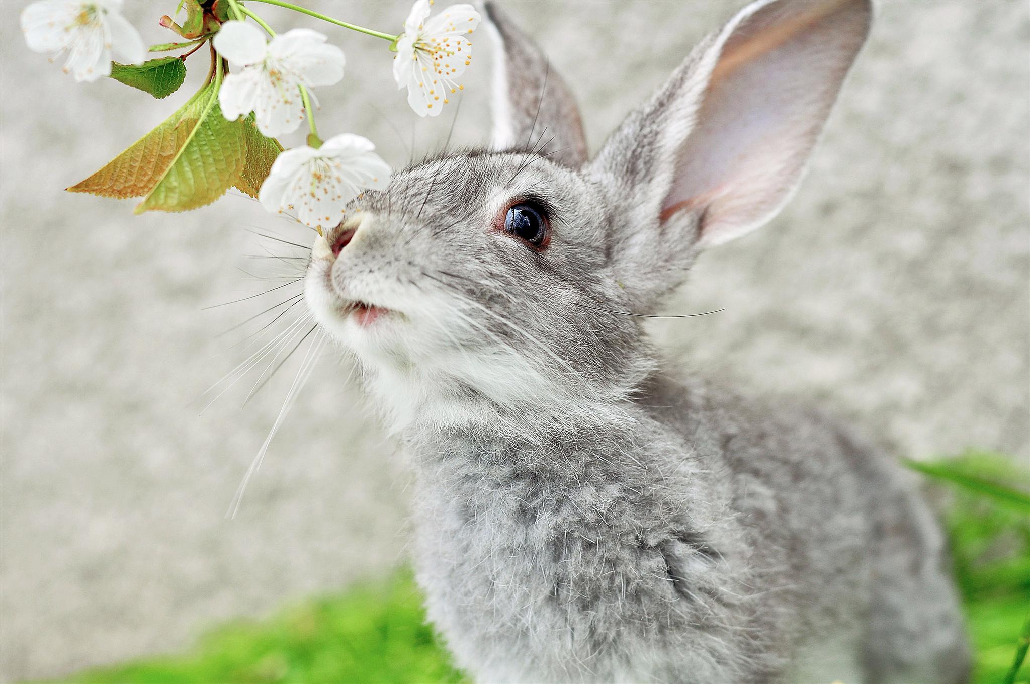 кролик девушка природа животное  № 1594019 без смс