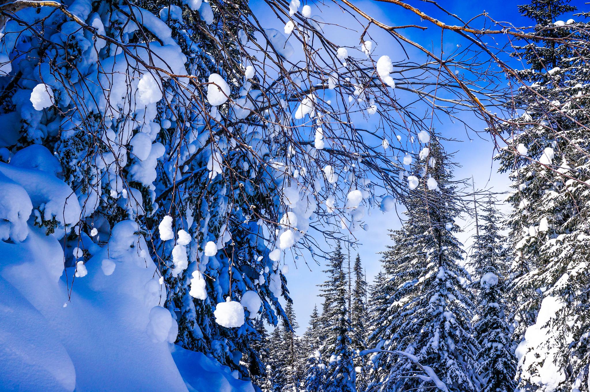 снег ветви лес snow branches forest  № 442873 бесплатно