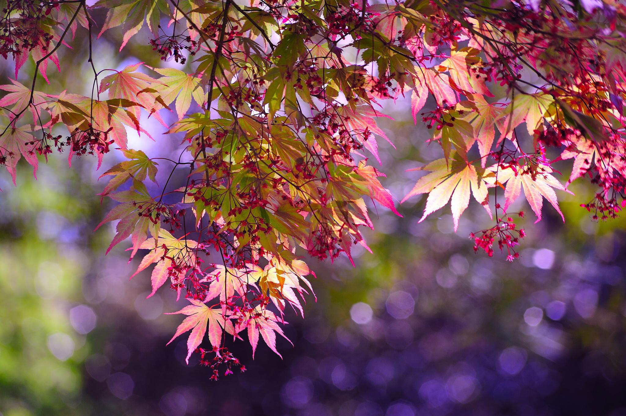 природа деревья ветки листья nature trees branches leaves  № 1275091 бесплатно