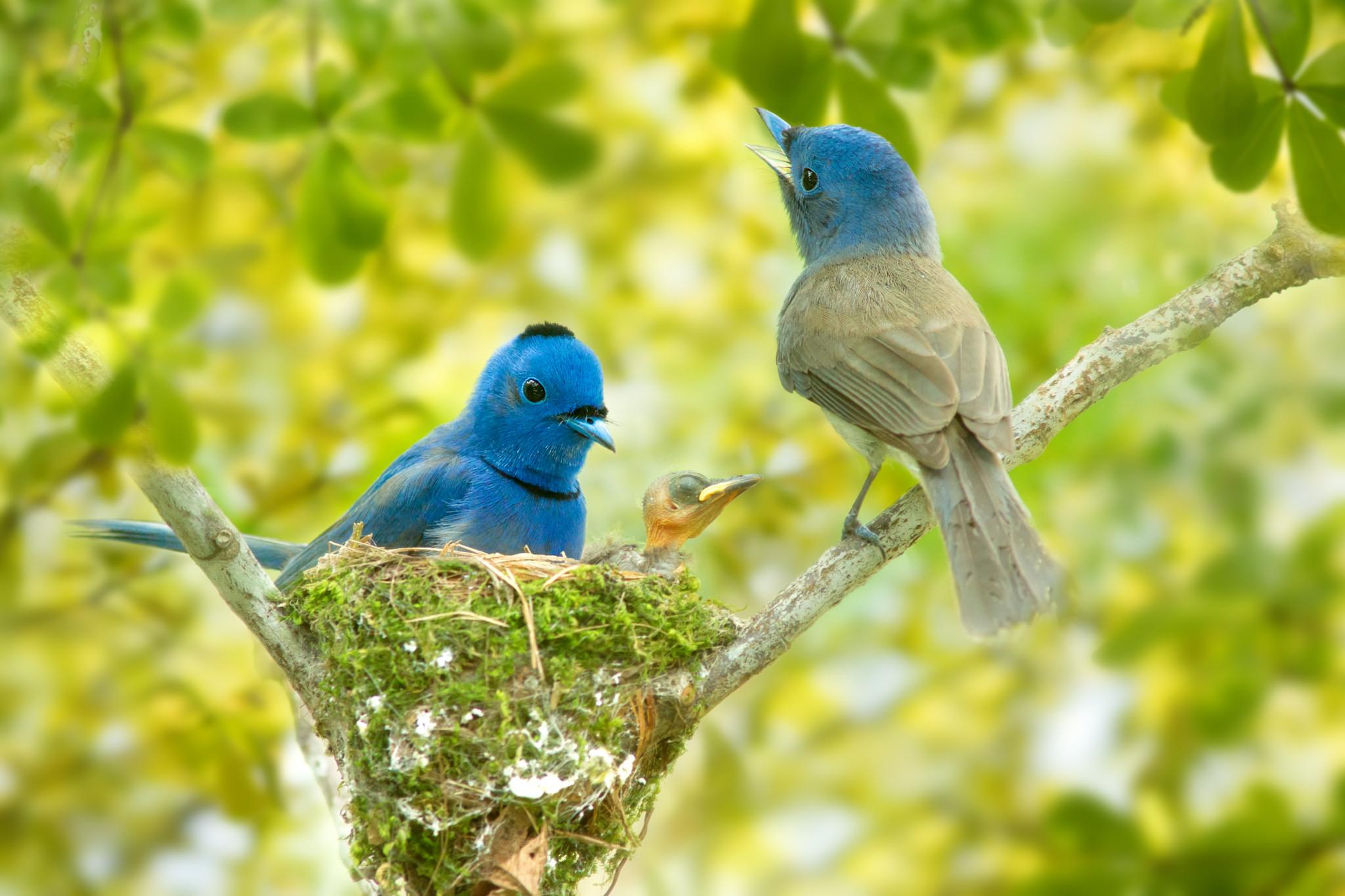 Две птички на стебле кукурузы  № 1532777  скачать