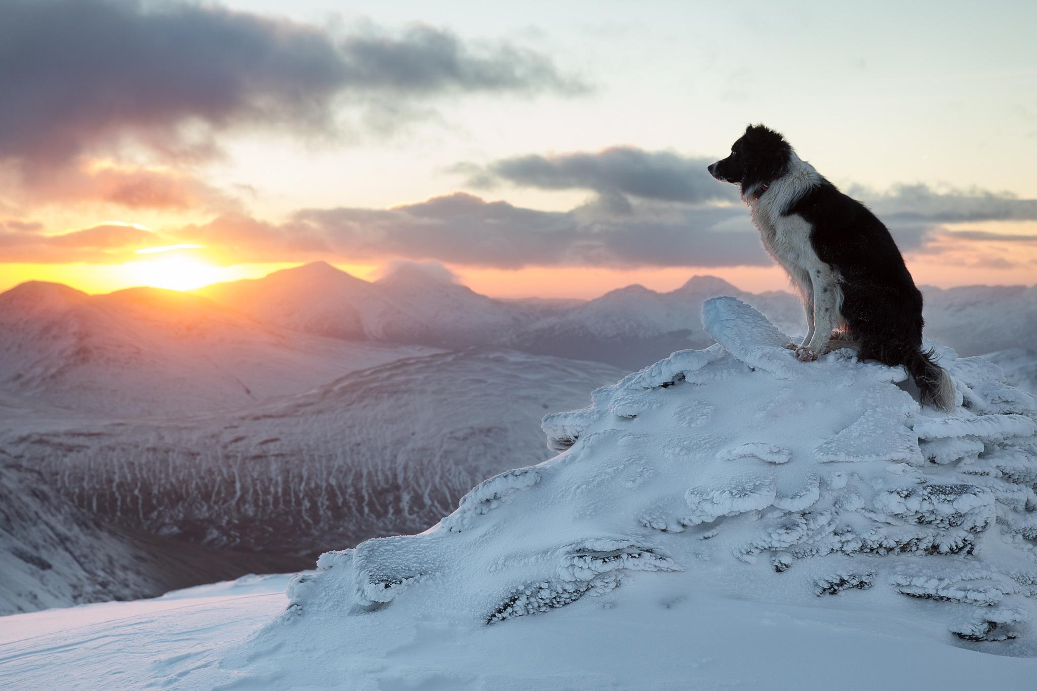 Собака на фоне заката  № 2038728  скачать