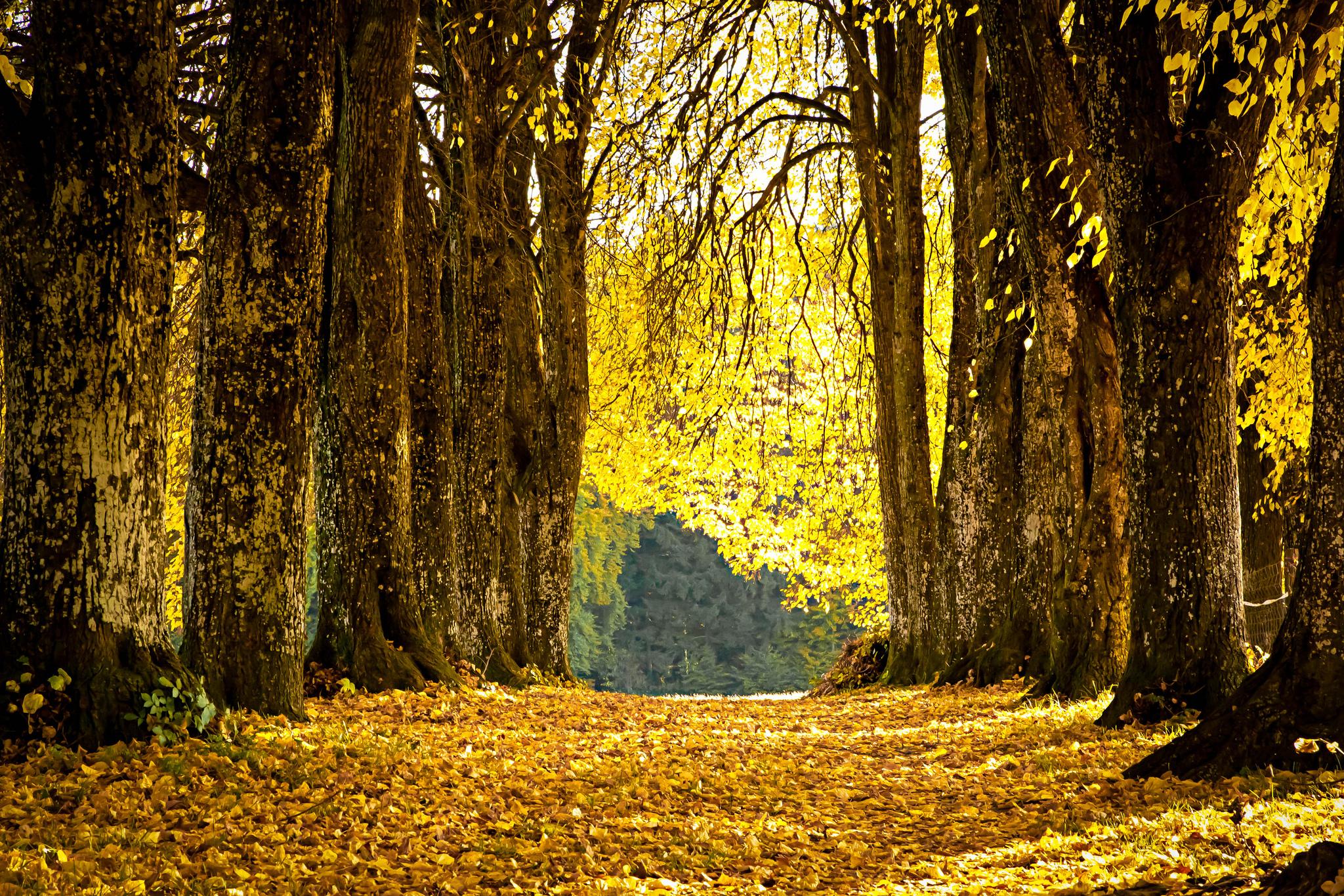 Опавшие желтые листья  № 1359380 без смс