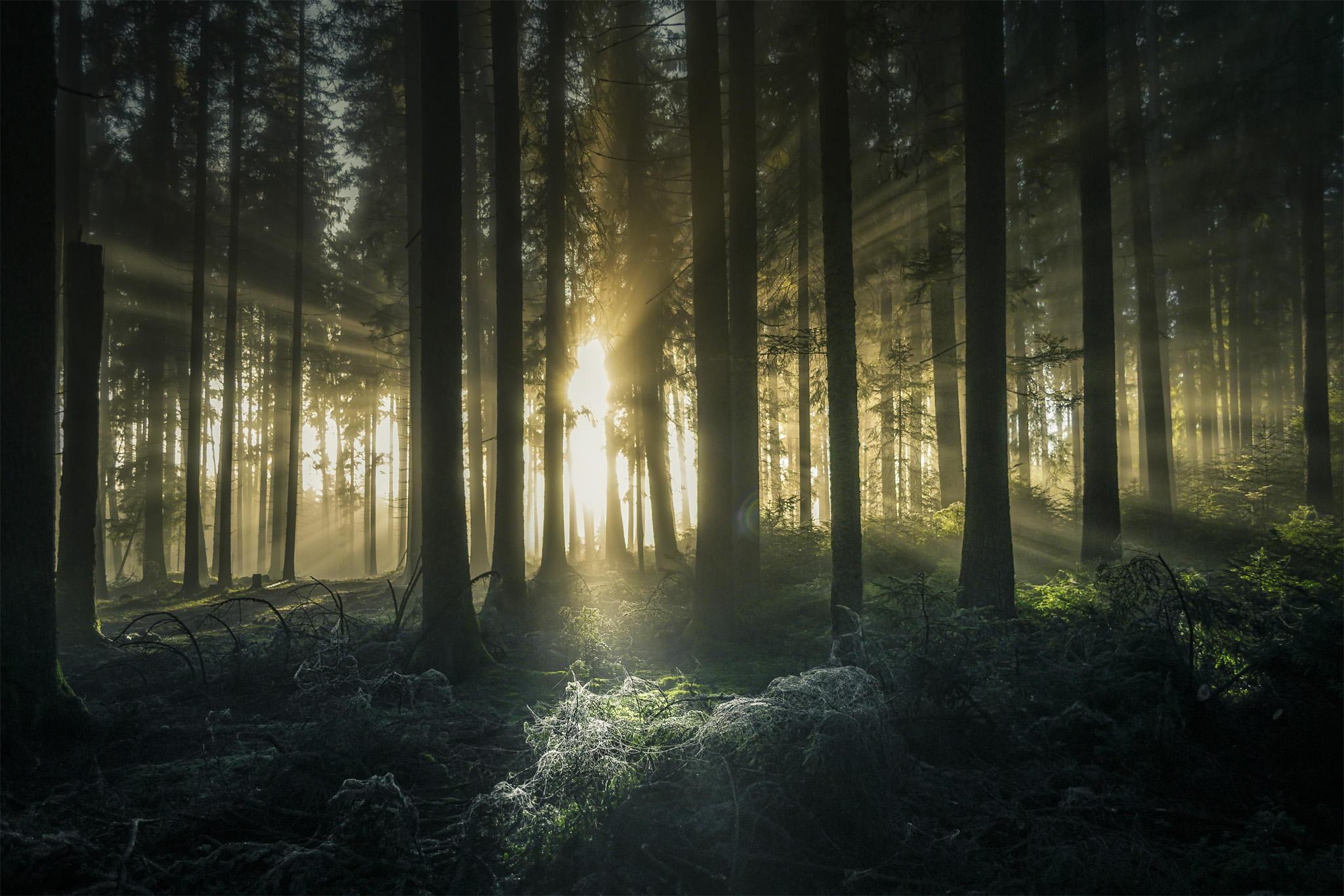 лес деревья солнечные лучи  № 917571  скачать