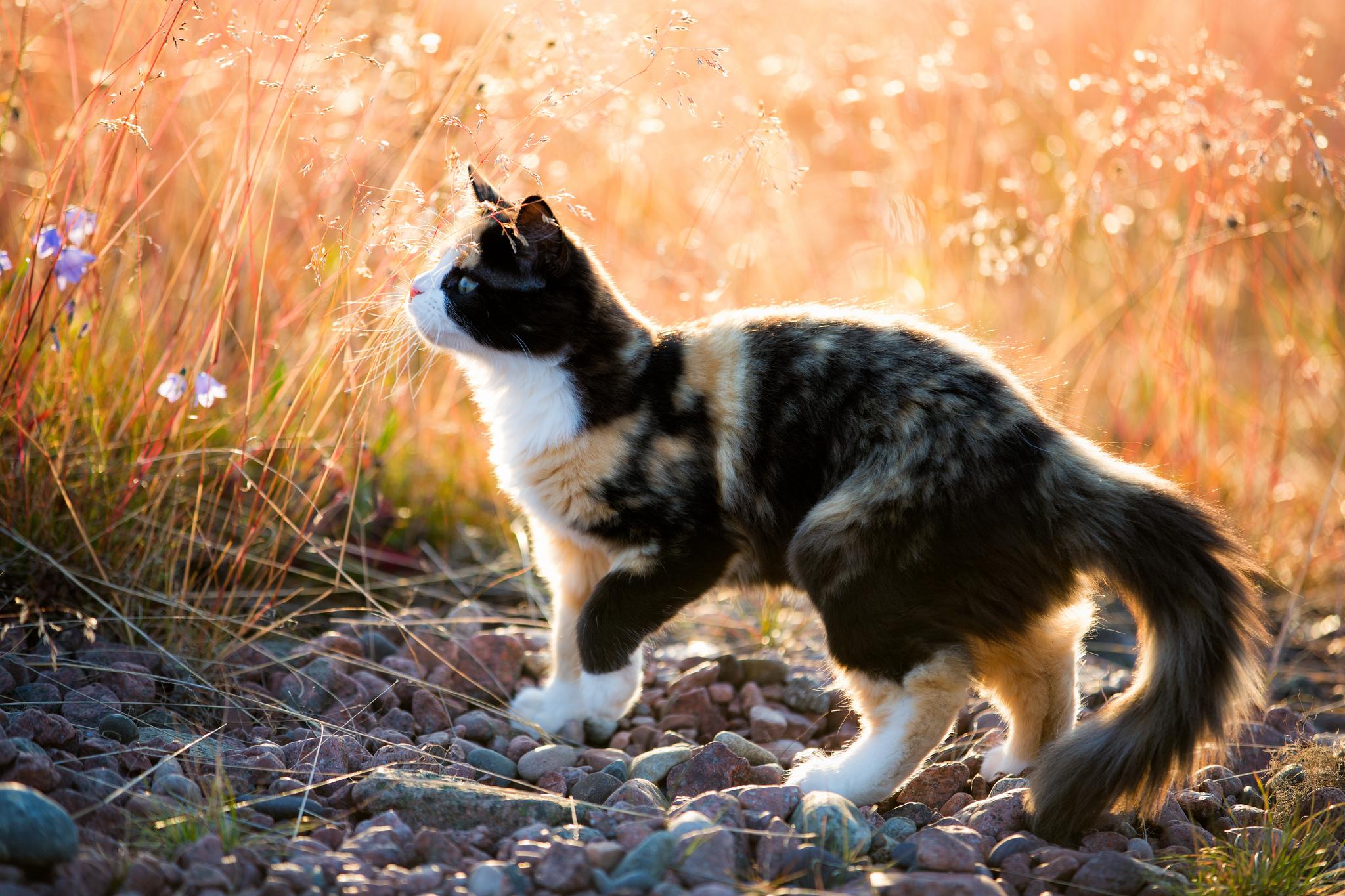 природа животные кот котенок черный  № 654410 загрузить
