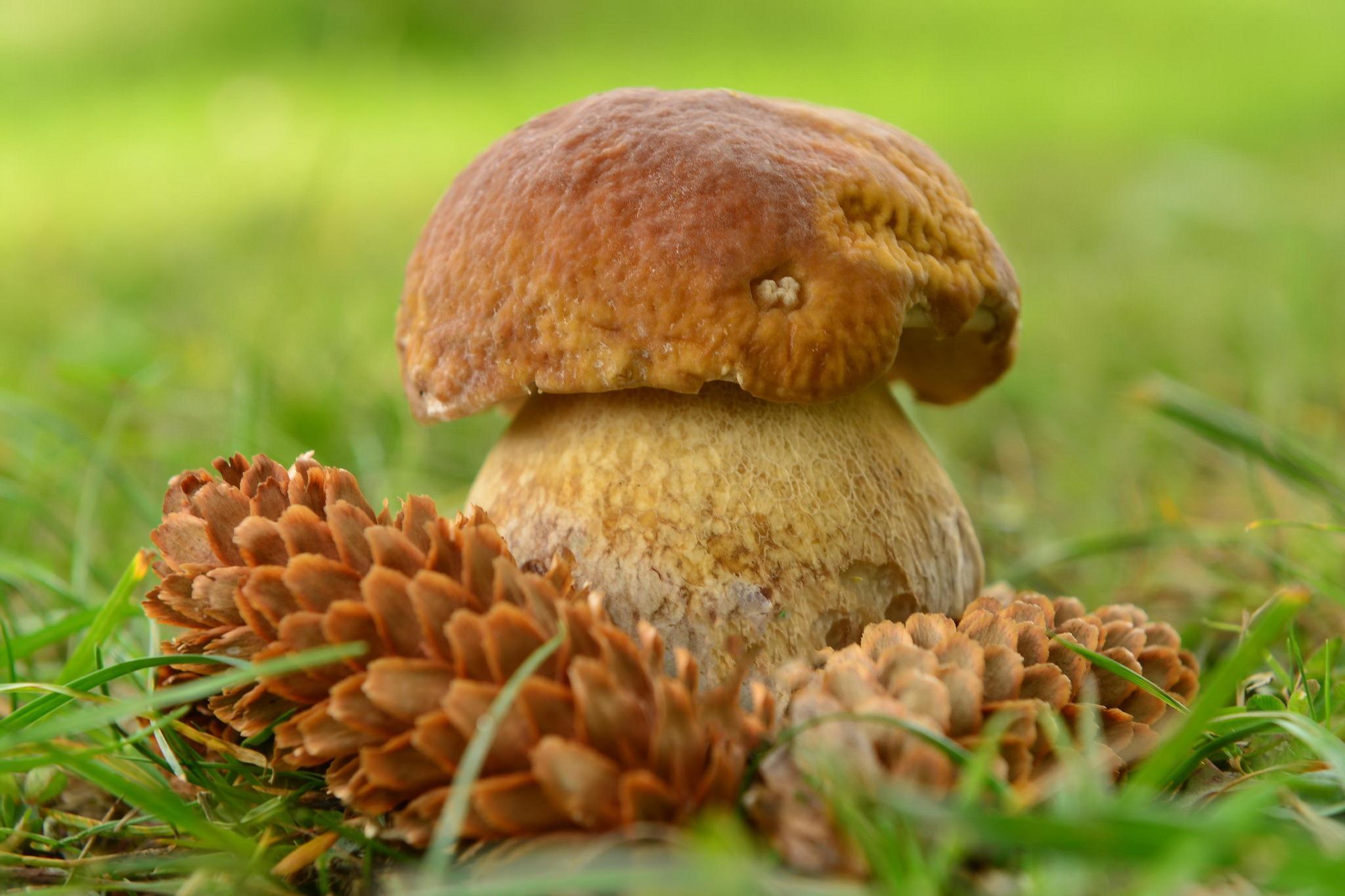 Прозрачный гриб  № 3337662 бесплатно