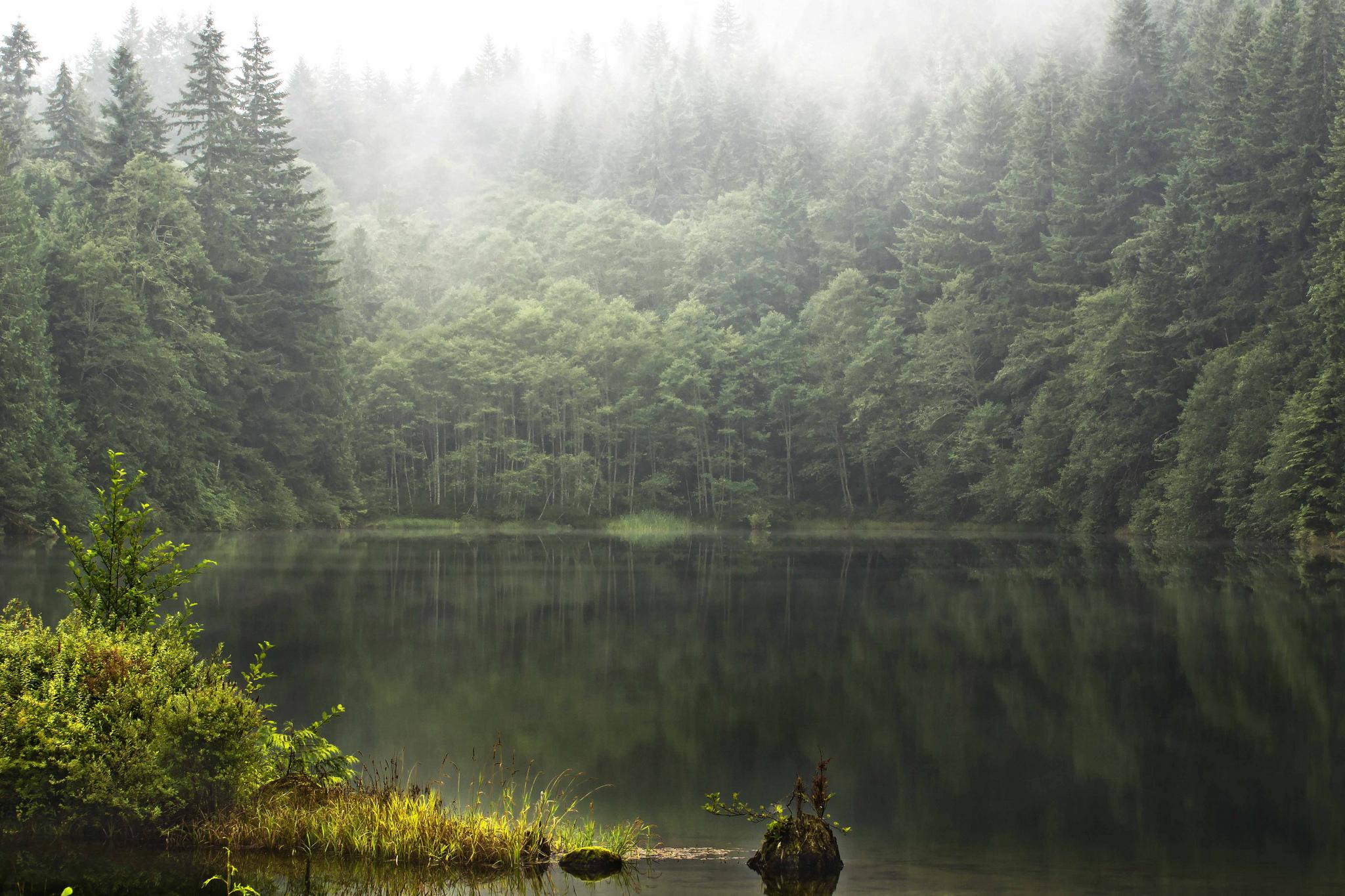 Туман над лесной речкой  № 636677  скачать