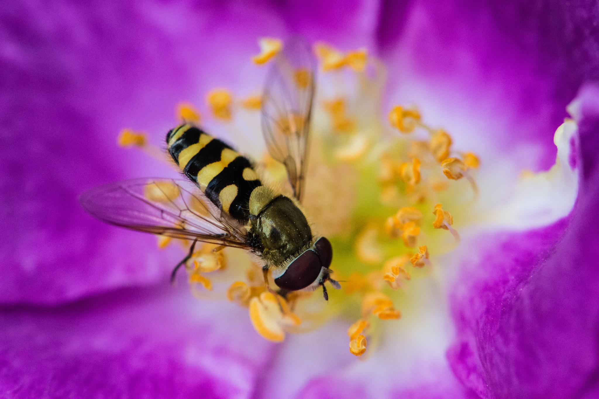 пчела цветы розовые flowers pink bee  № 910825 без смс