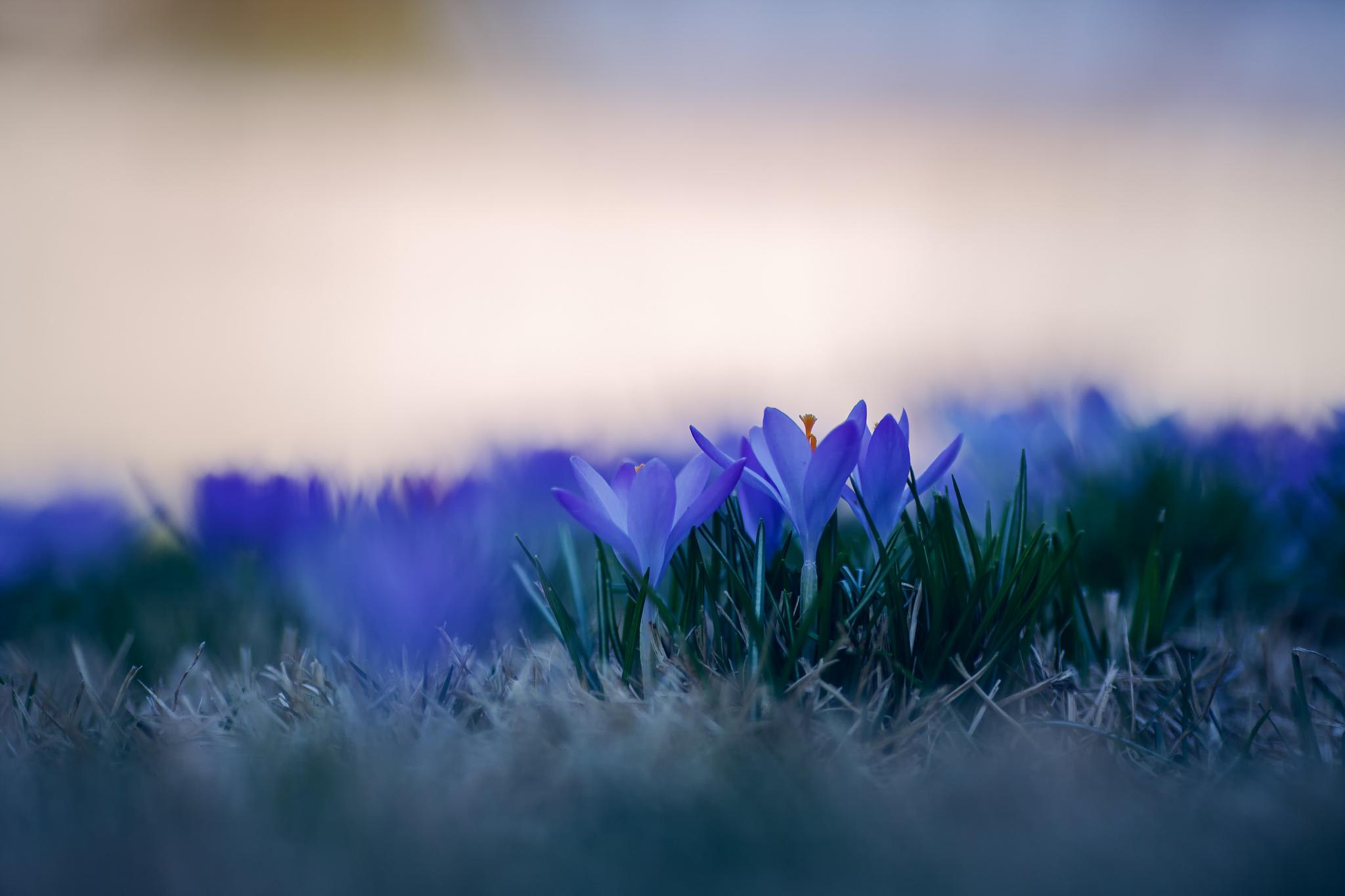 природа синие цветы nature blue flowers  № 1376536 бесплатно