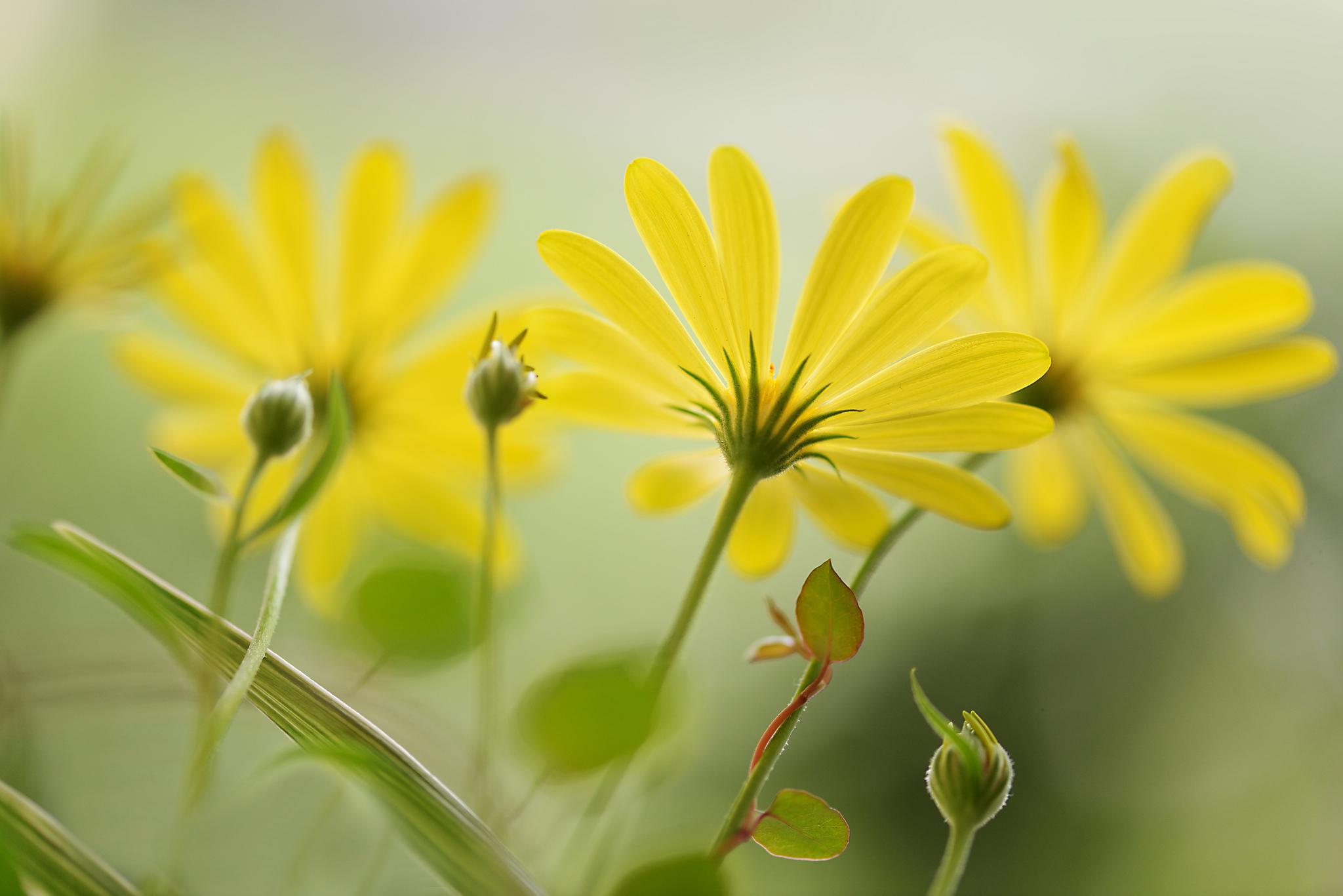 цветок желтый flower yellow  № 1246513  скачать