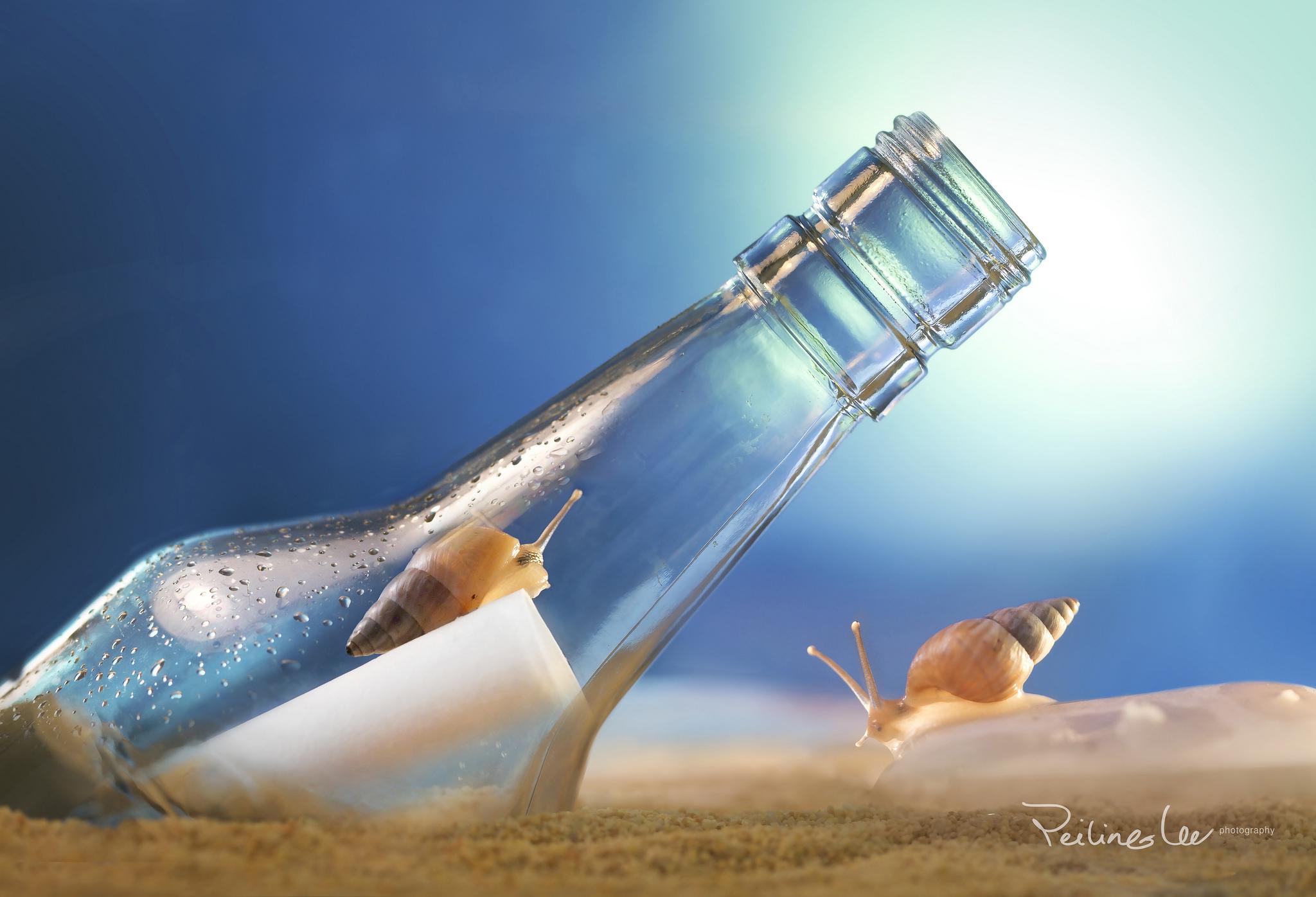 бутылка с запиской  № 2294781  скачать