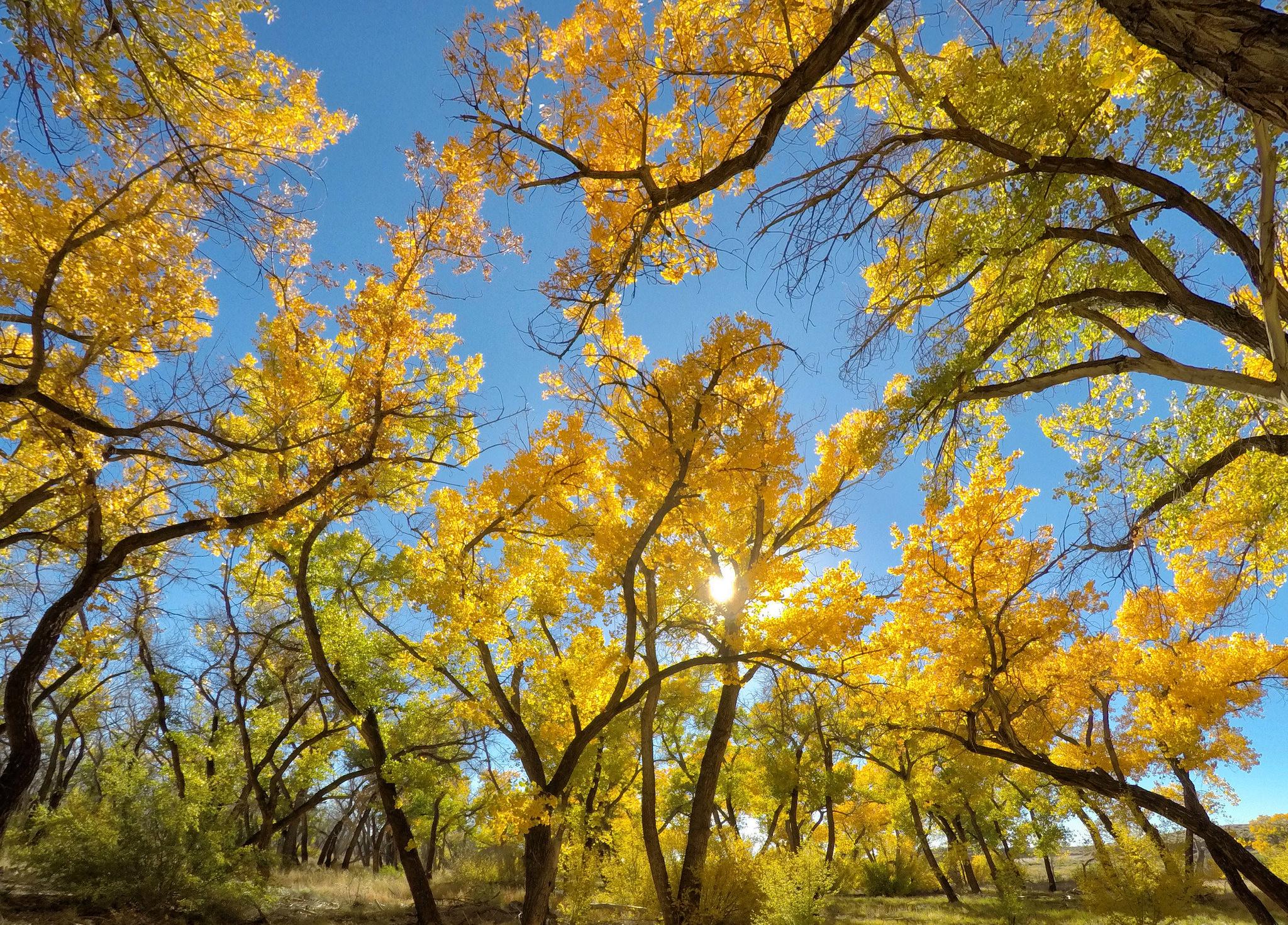 деревья листва осень солнце  № 3191811 без смс