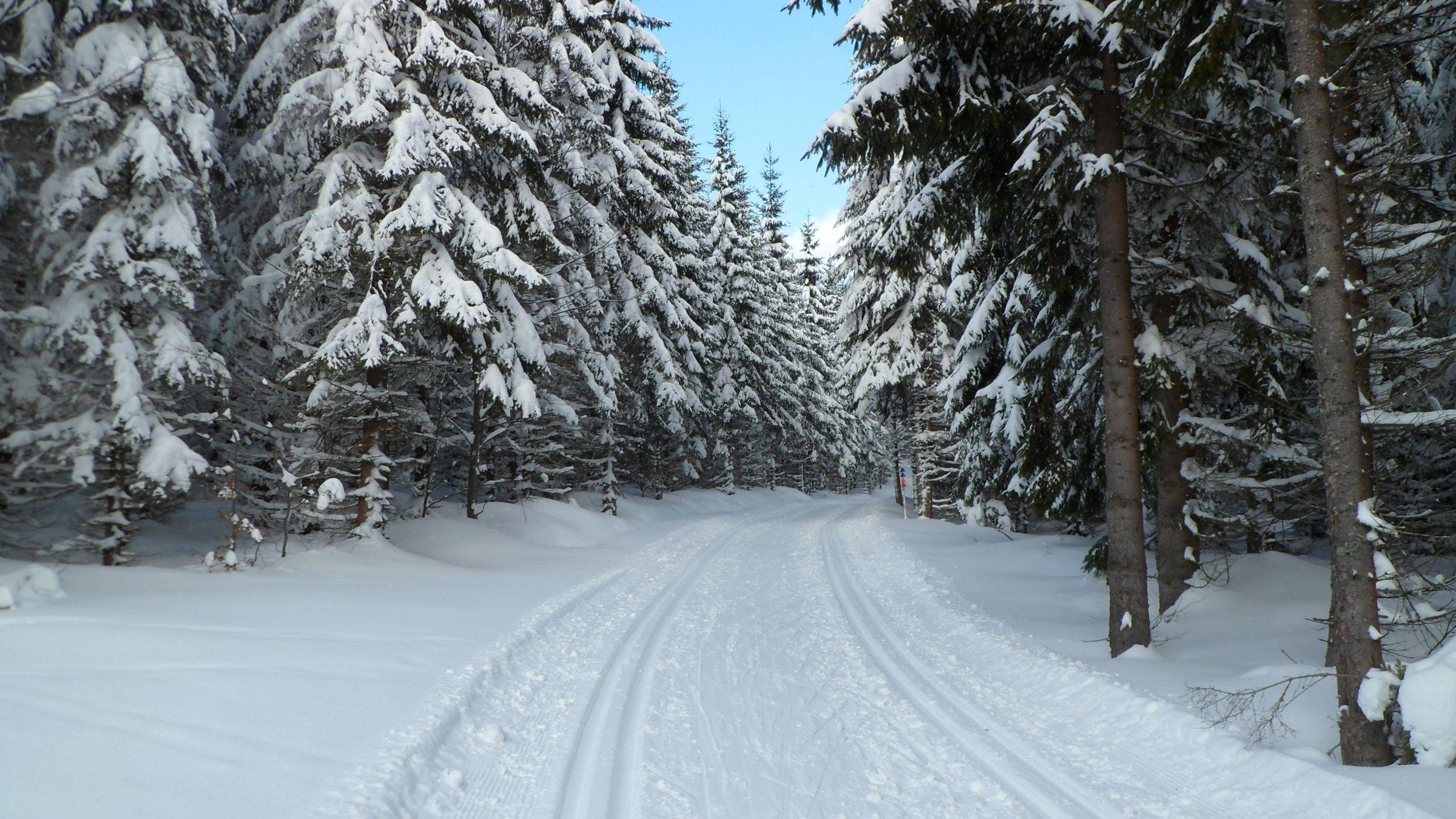 Парк зима ели  № 2388904 без смс