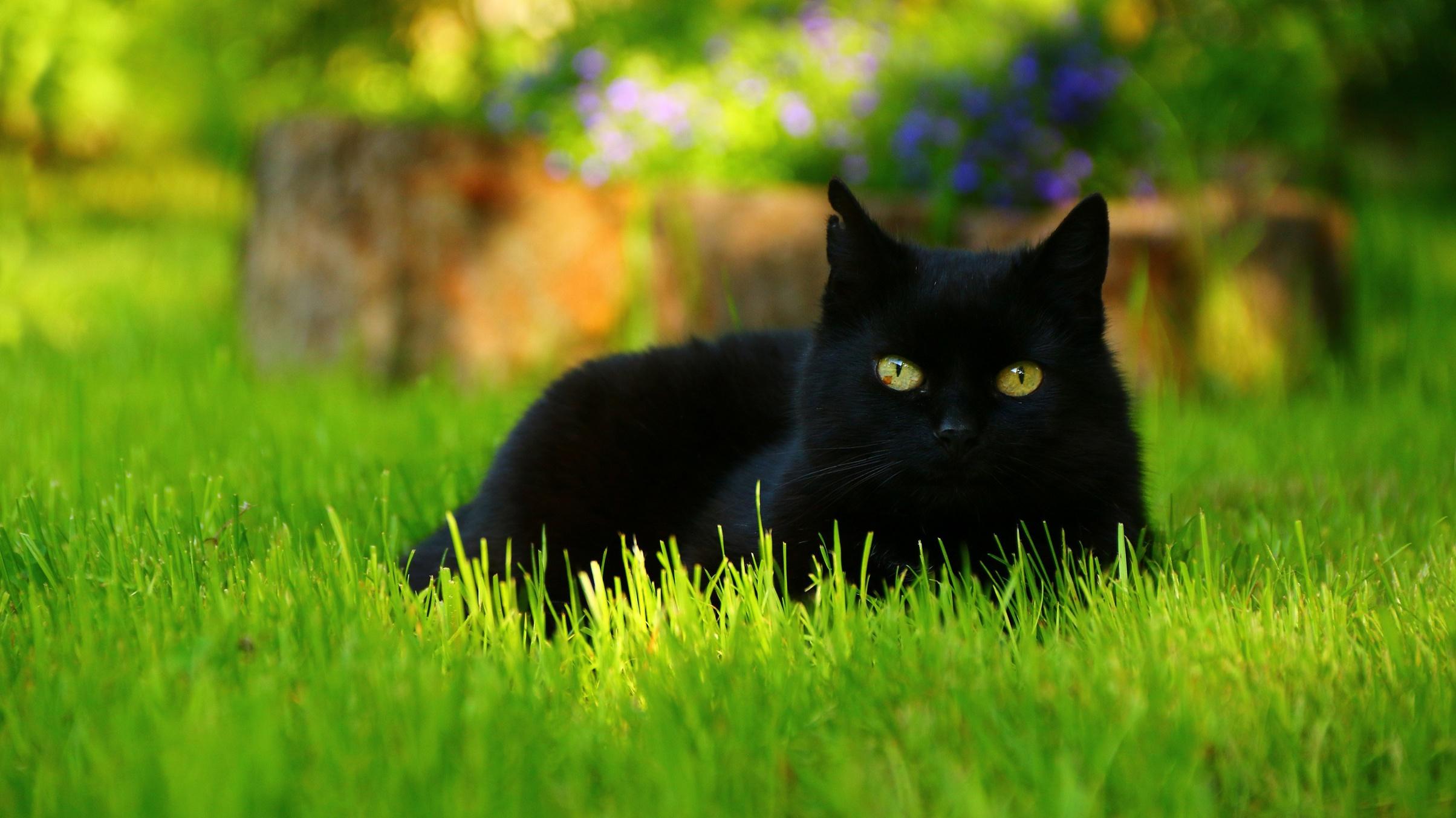 природа животные кот котенок черный  № 654394 бесплатно