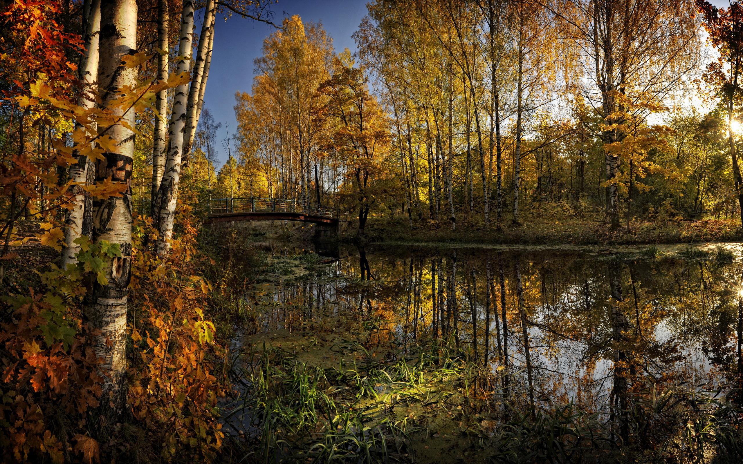 река осень деревья  № 3186328 бесплатно