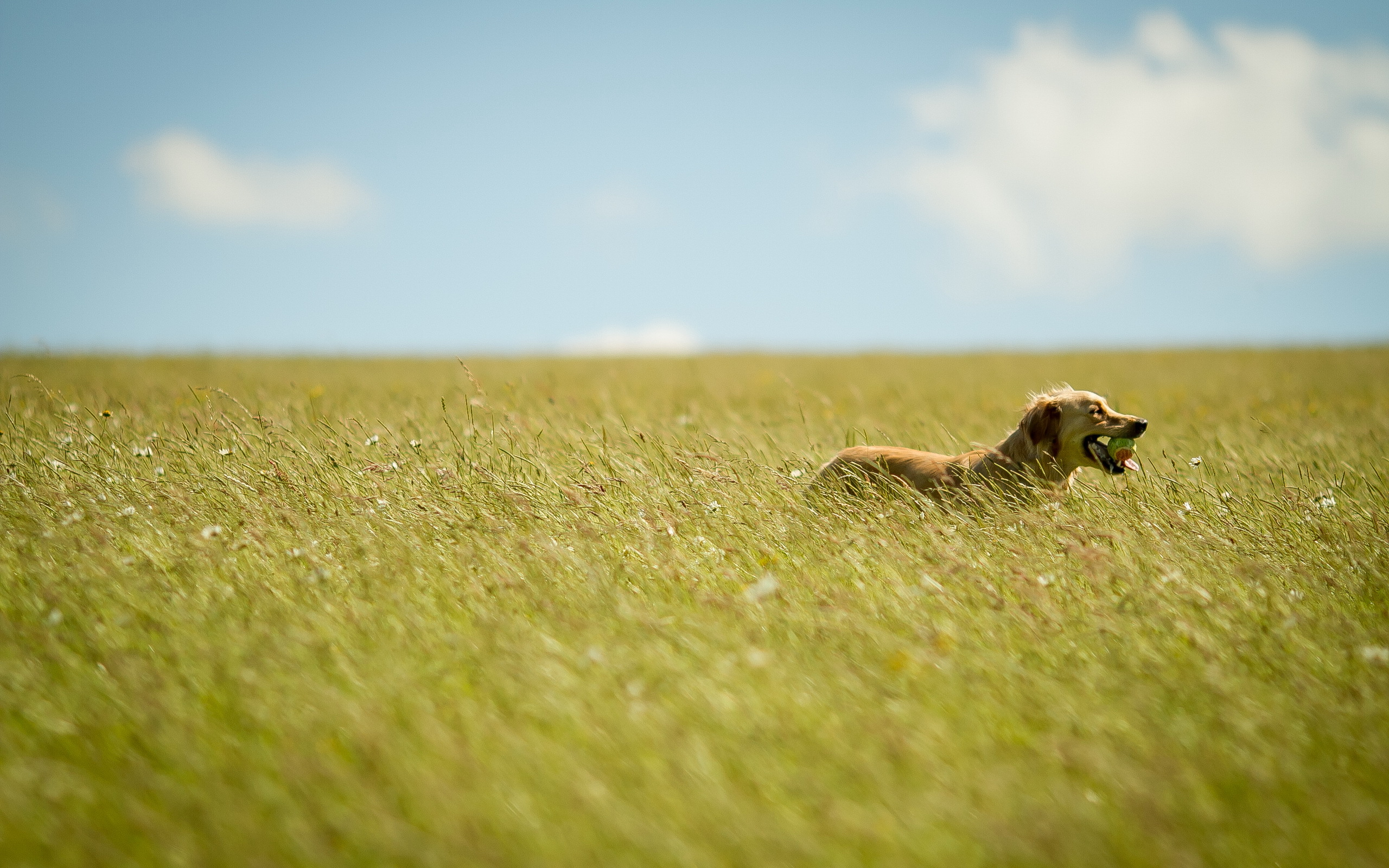 собачка трава лето  № 3650070 без смс
