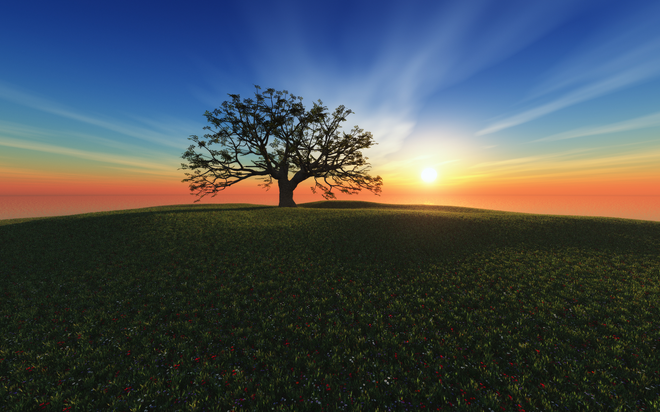 Закат дерево поля холмы  № 2965349 загрузить