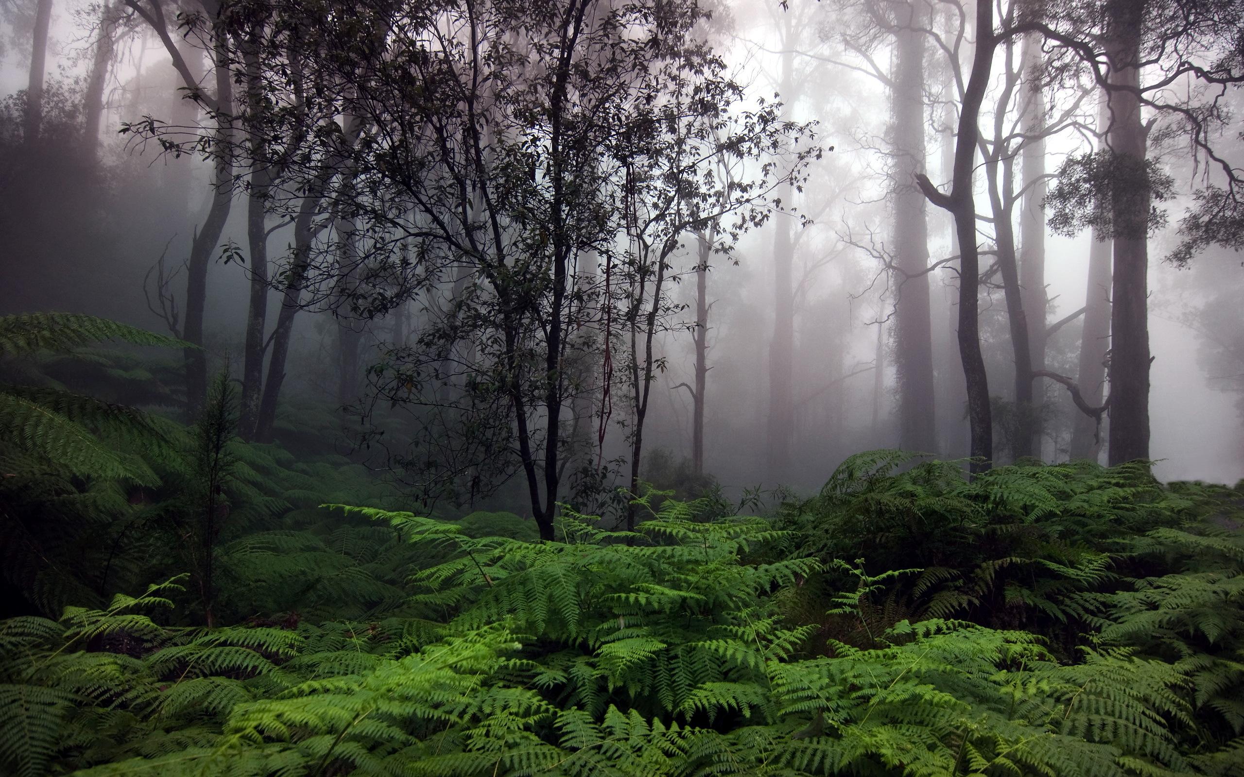 обои на рабочий стол лес в тумане hd № 252019 бесплатно