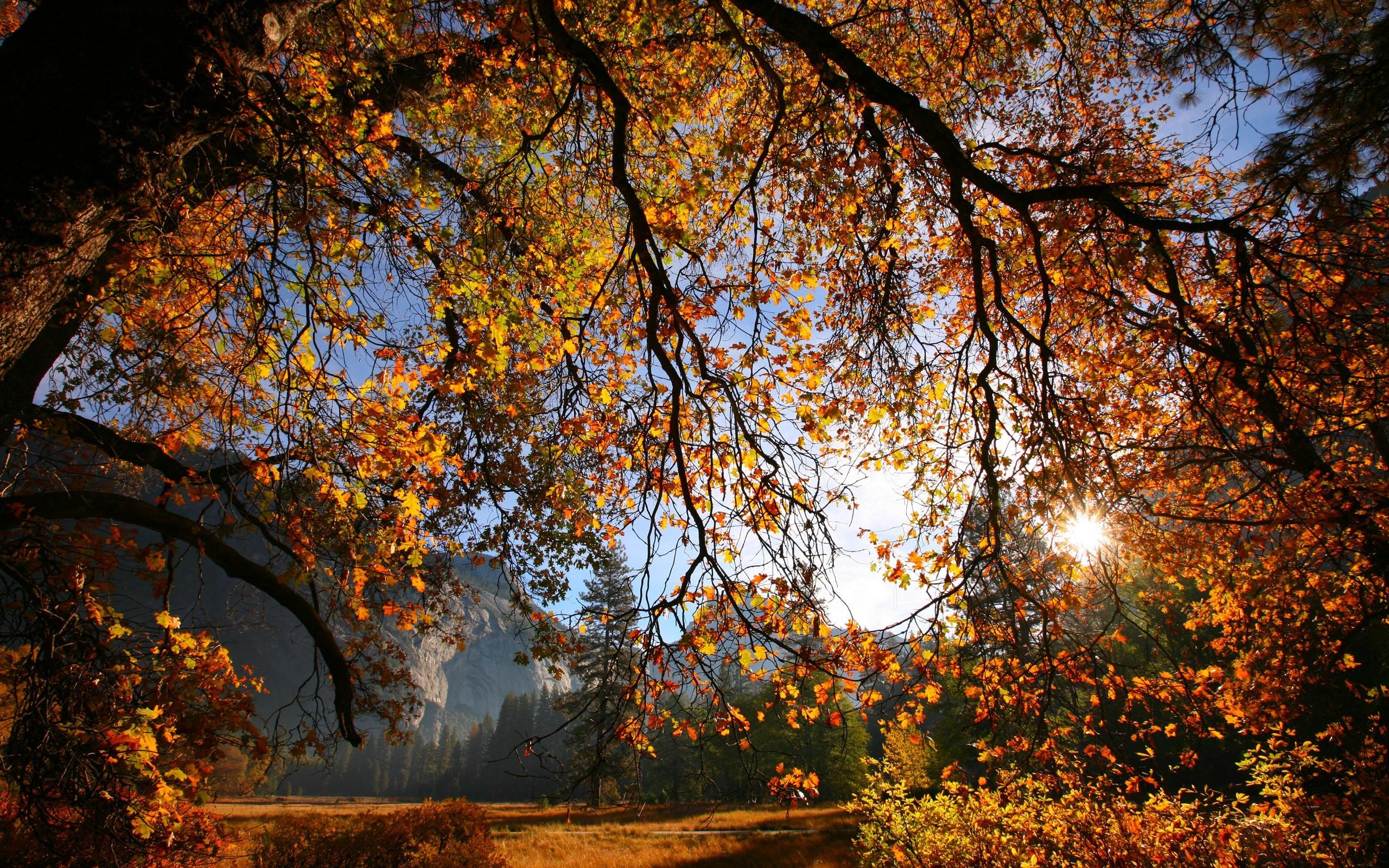 деревья листва осень солнце  № 3191699  скачать