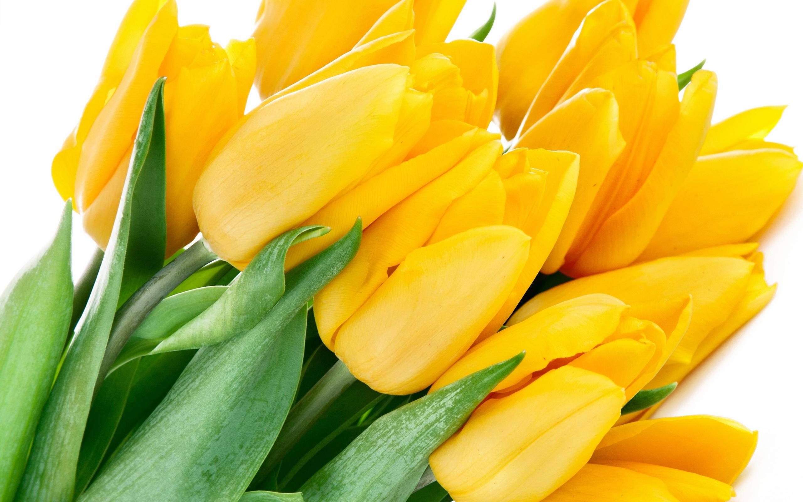 букет,тюльпаны,листья  № 415712 бесплатно