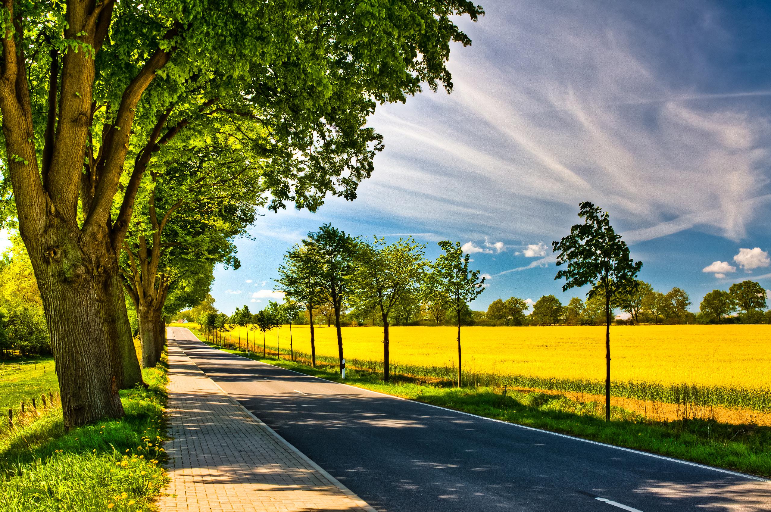 дорога, солнце, трава, деревья  № 3117771  скачать