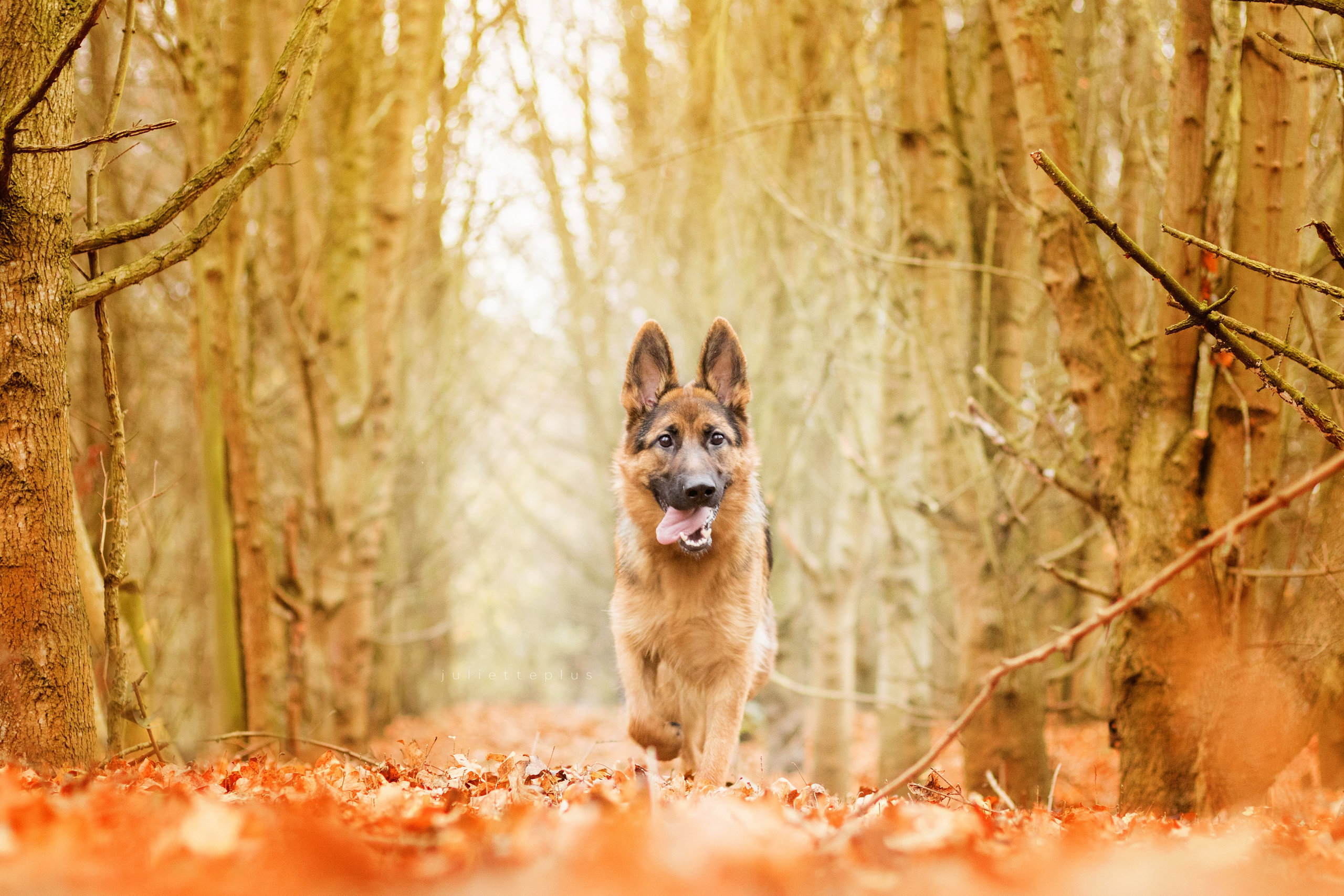 собака животное природа  № 690800  скачать