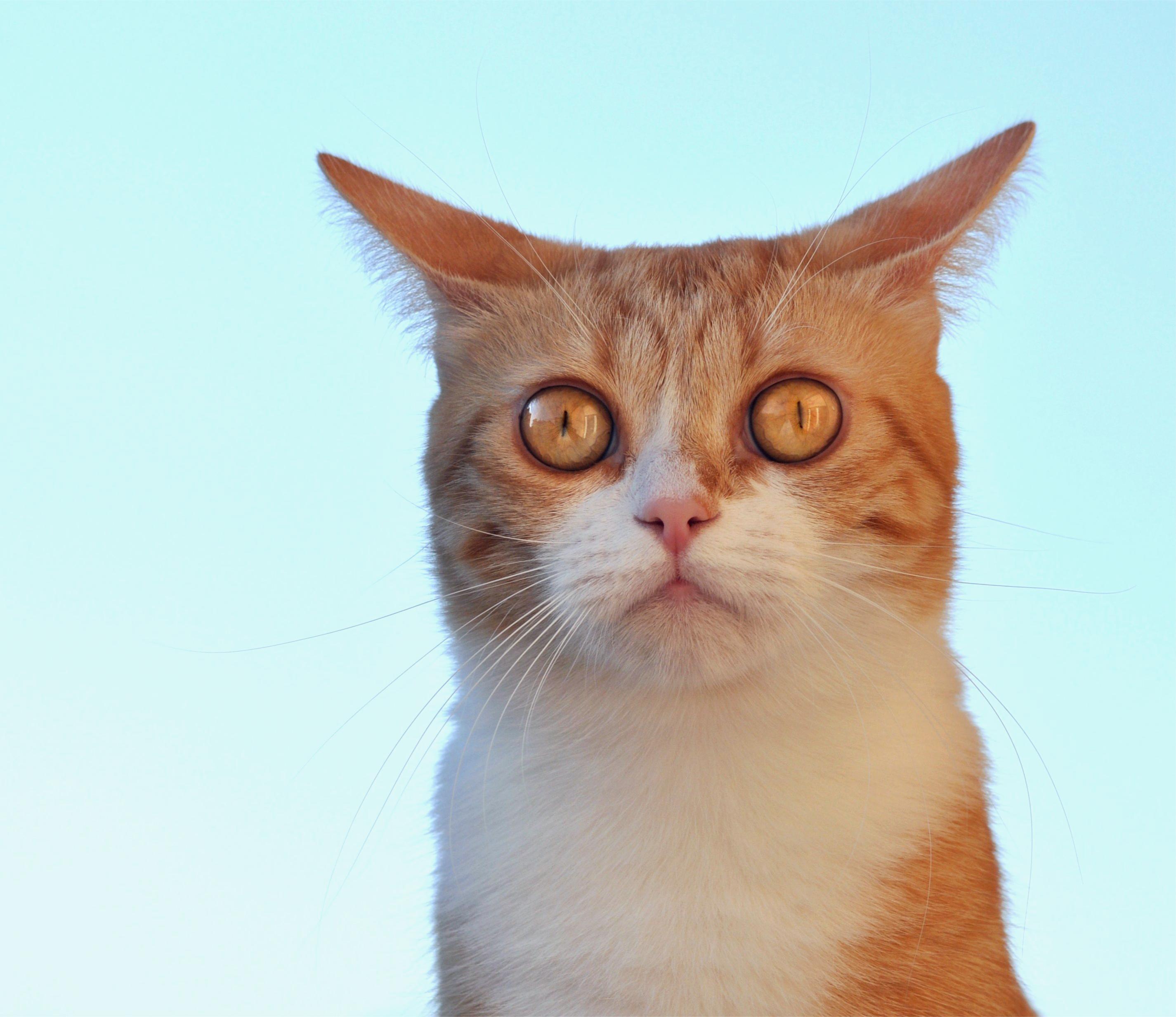 Удивленные котенки  № 1097896 загрузить