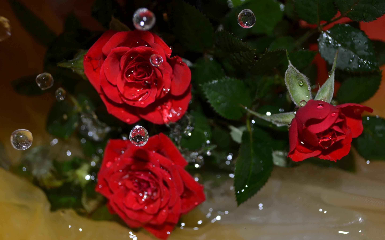 Роза с капельками  № 1352885 без смс