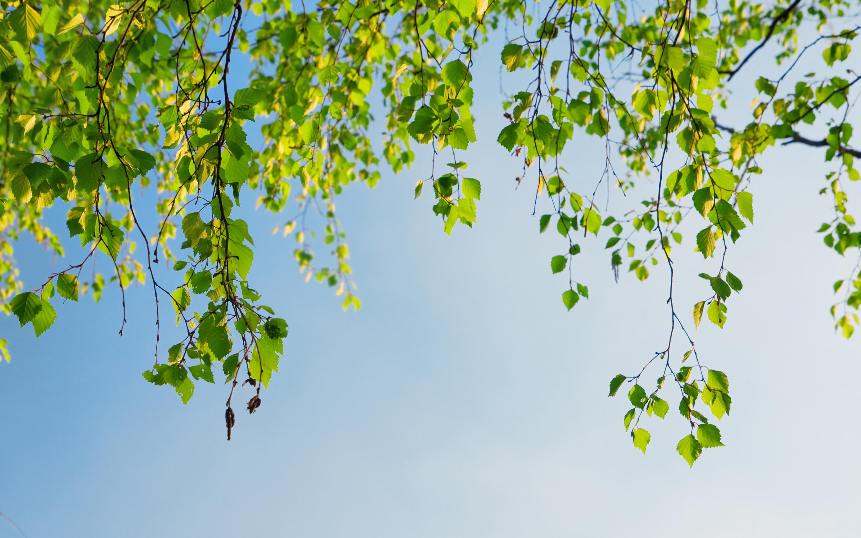 природа деревья ветки листья nature trees branches leaves  № 1275059 бесплатно