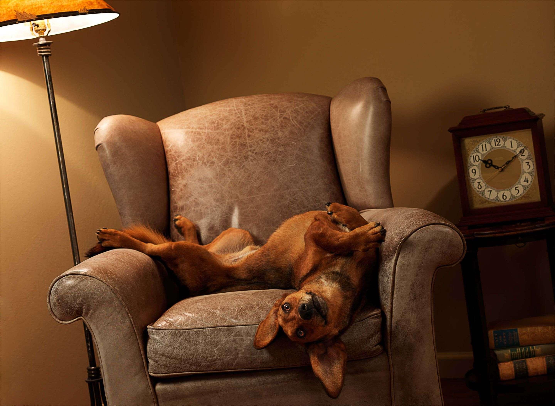 кот животное кресло морда  № 1943899  скачать