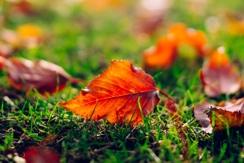 природа лист осень  № 543306 без смс