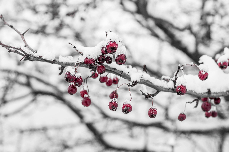 природа ветка снег  № 3089971  скачать