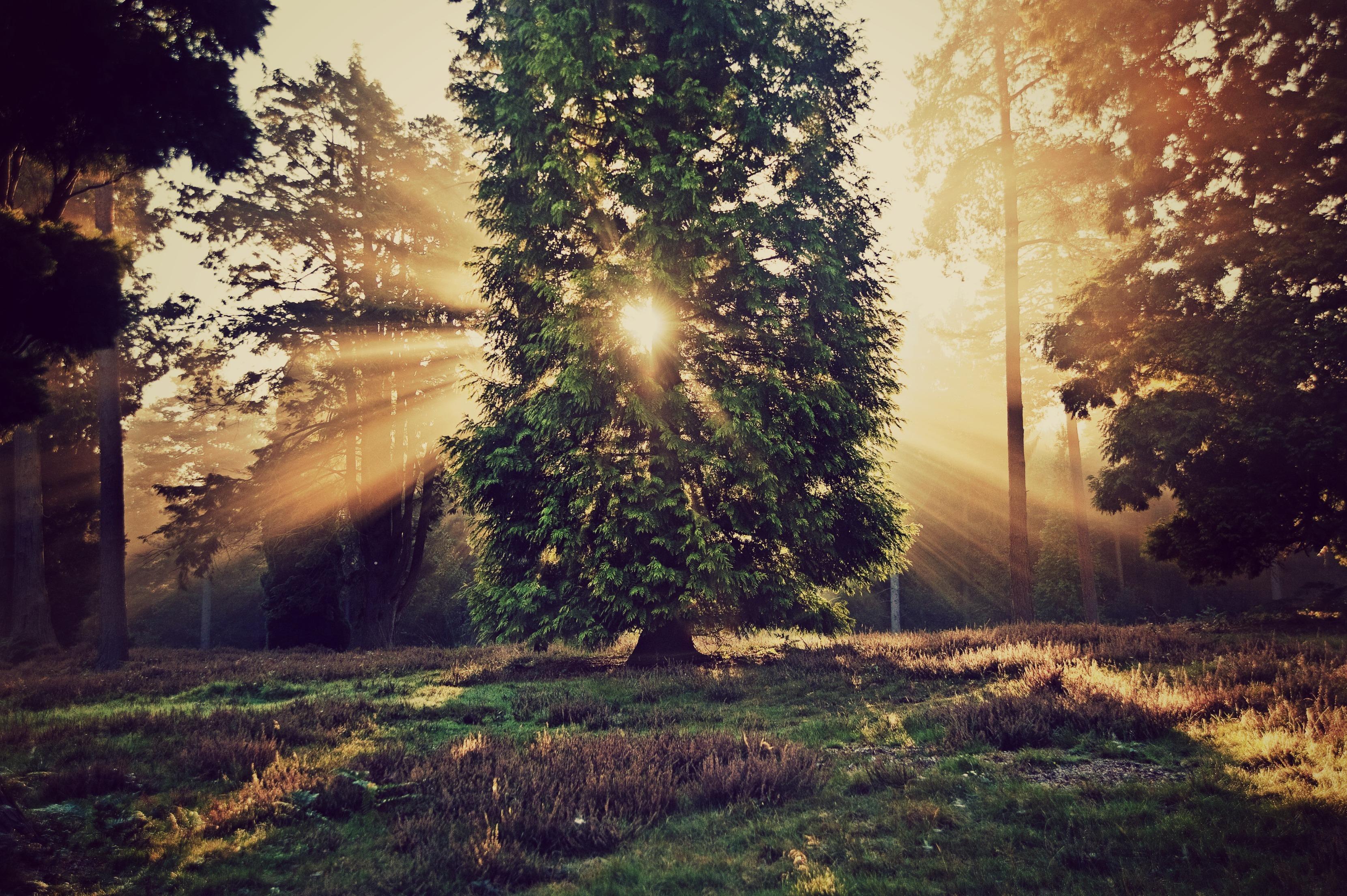закат,деревья,зелень  № 1076642 без смс