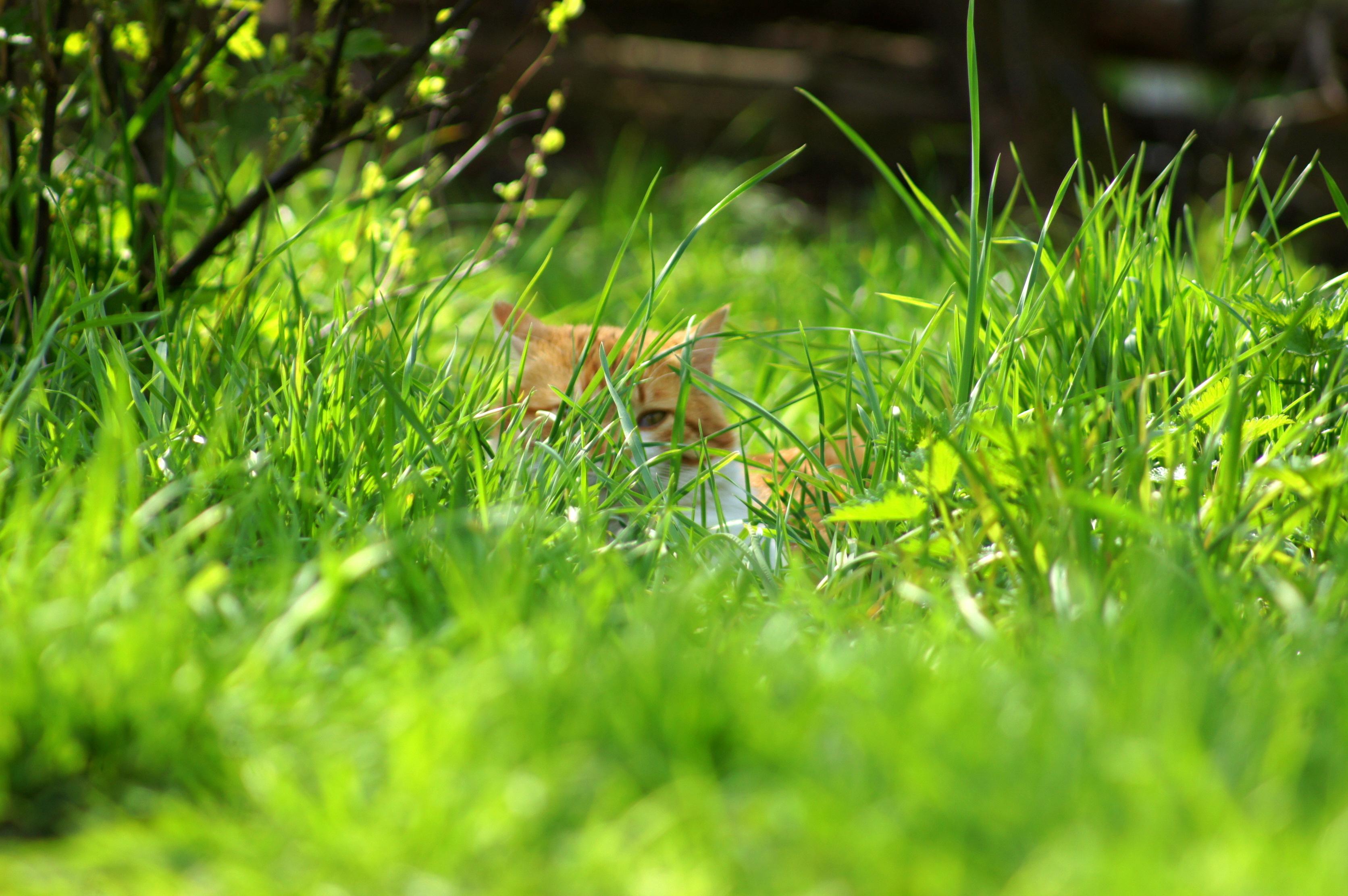 Котенок в траве  № 2954135 без смс